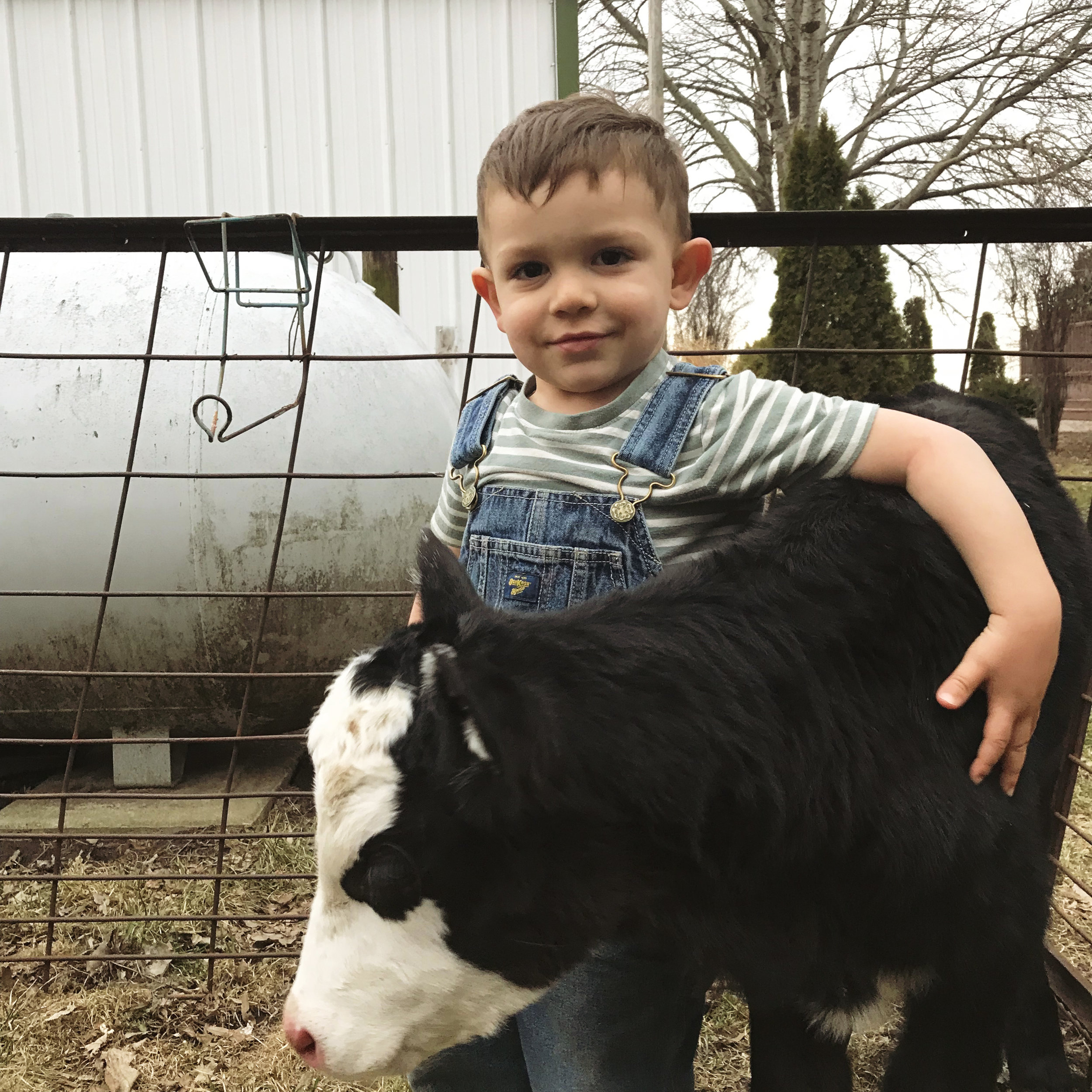 Homestead Update: Lessons Learned, Farmhouse Remodels, and Baby Animals Galore! - Under A Tin Roof Blog
