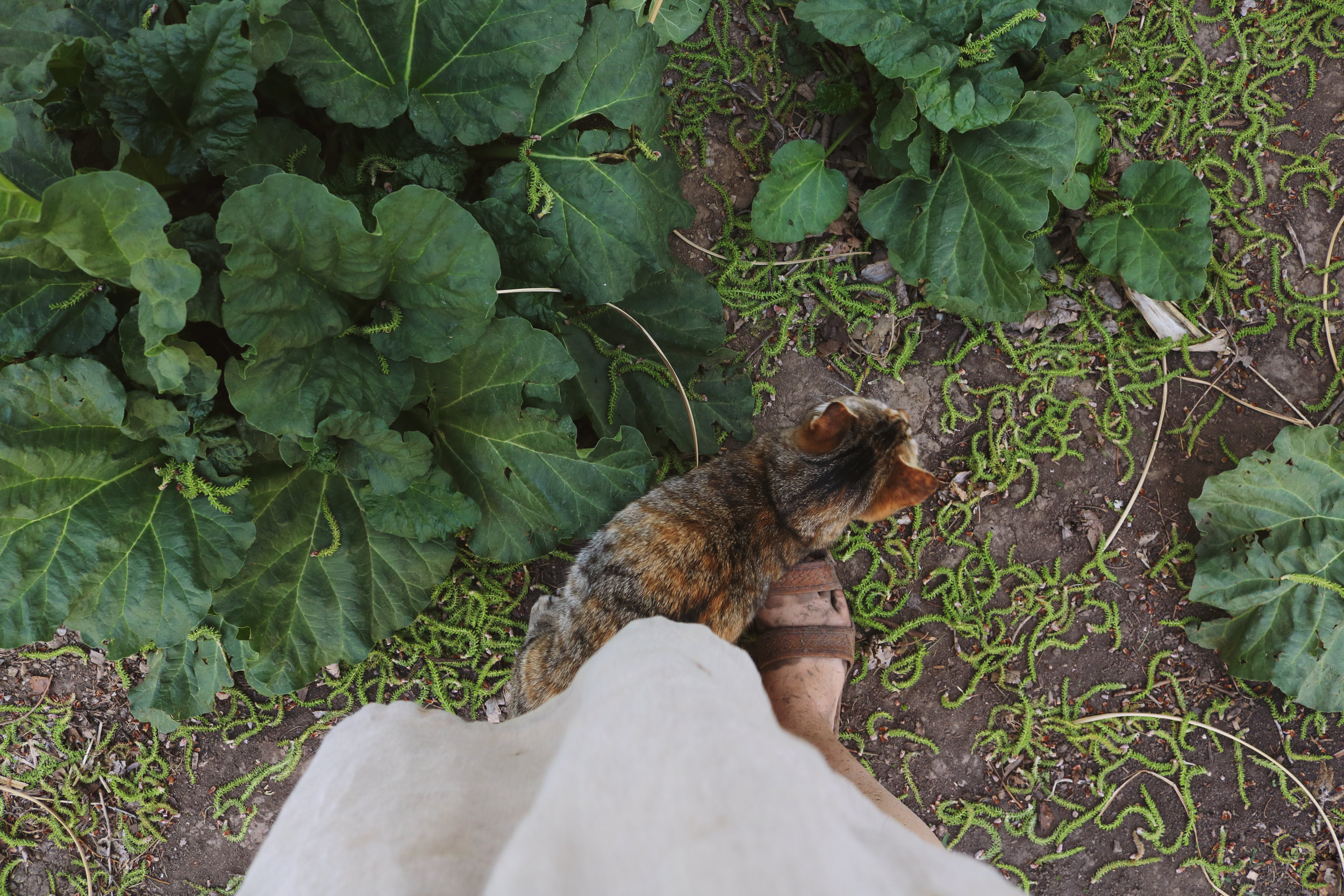 Discovering Rhubarb in the Garden + 30 Ways to Use It! - Under A Tin Roof Blog