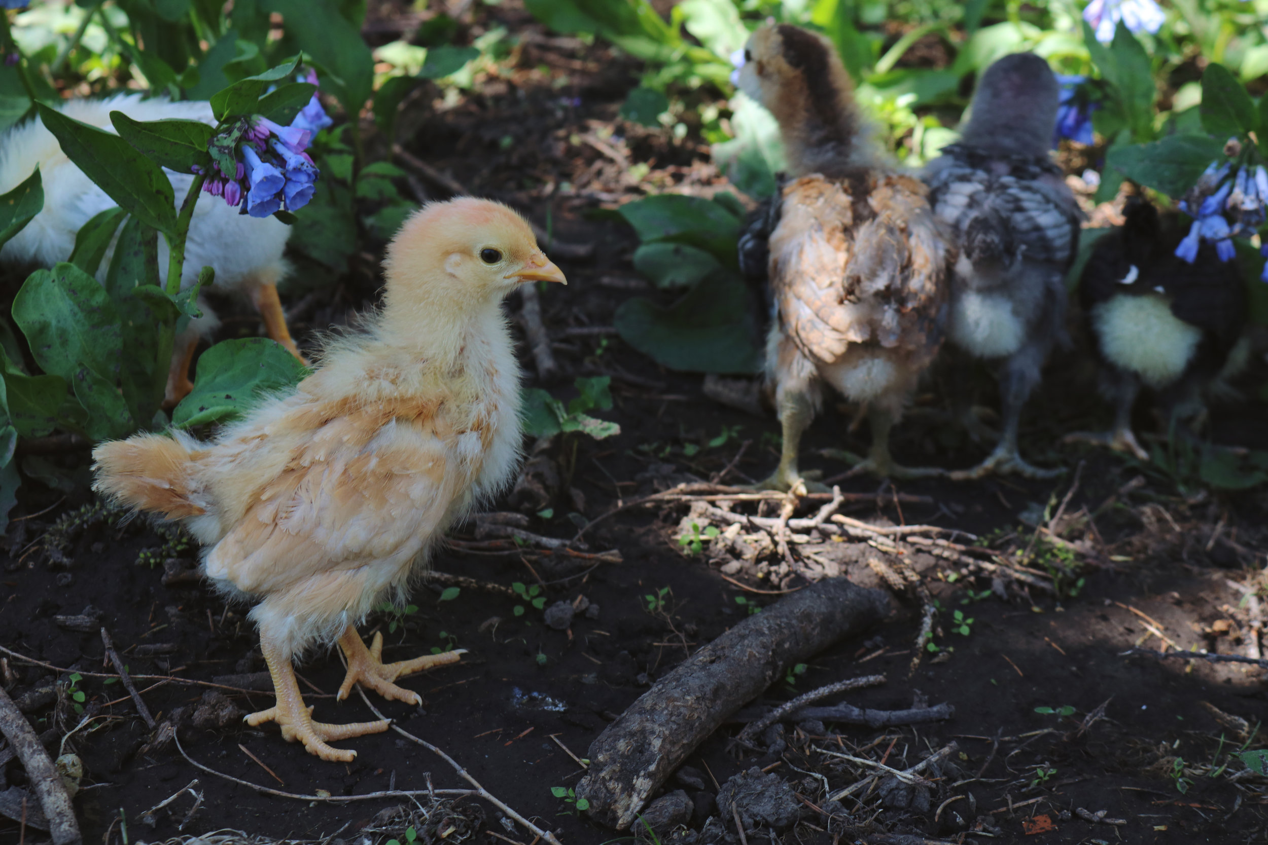 A Day in the Life on the Farm - Under A Tin Roof Blog