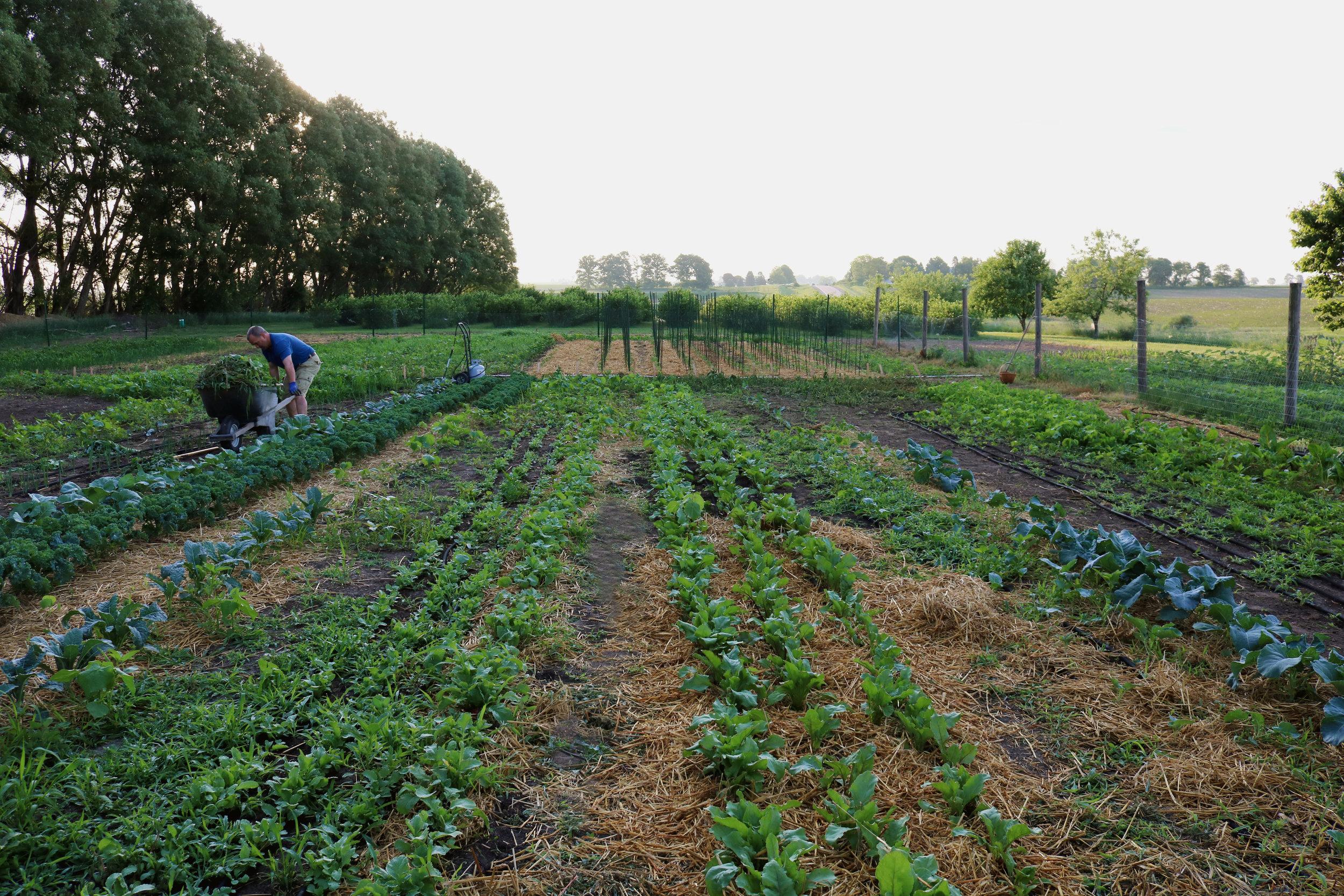 Our Market Garden Plot for 2018 - Under A Tin Roof Blog