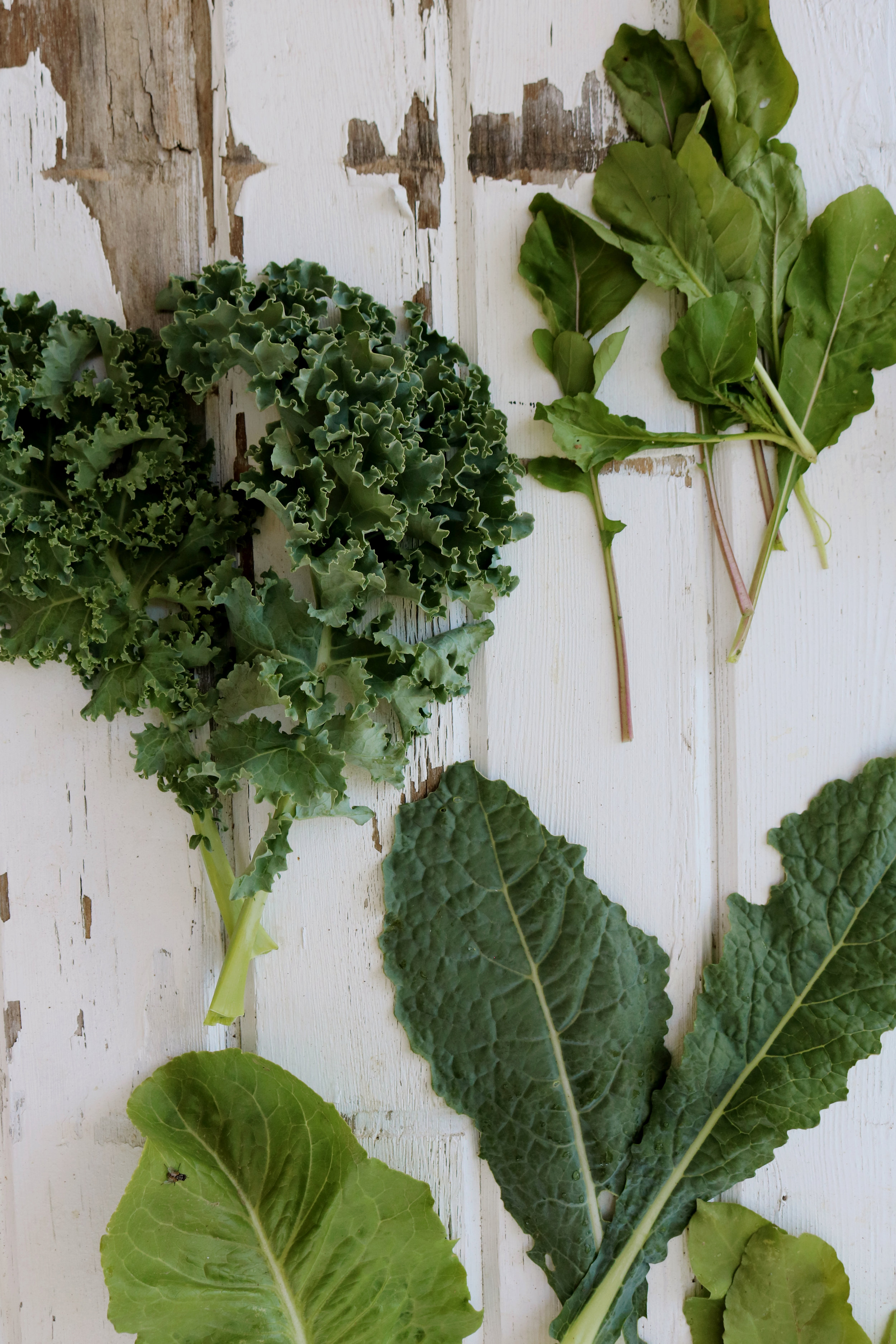 My Favorite Mixed Greens to Grow for Salads