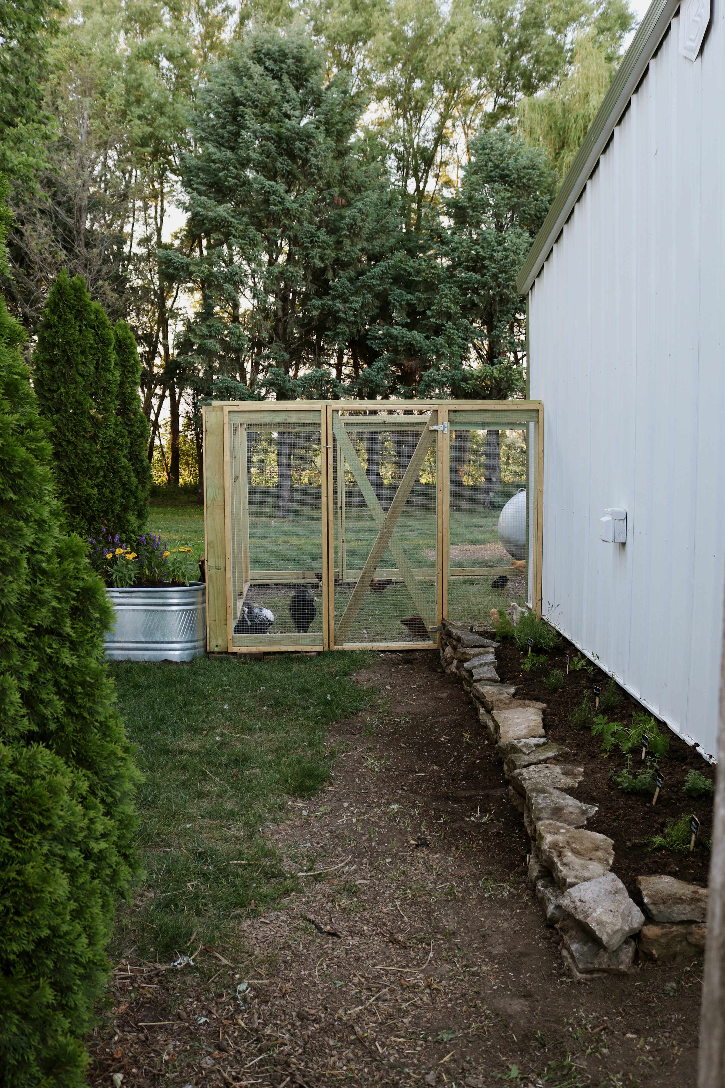 Homestead Update:  Begone Weeds! Summer is Here to Stay - Under A Tin Roof Blog