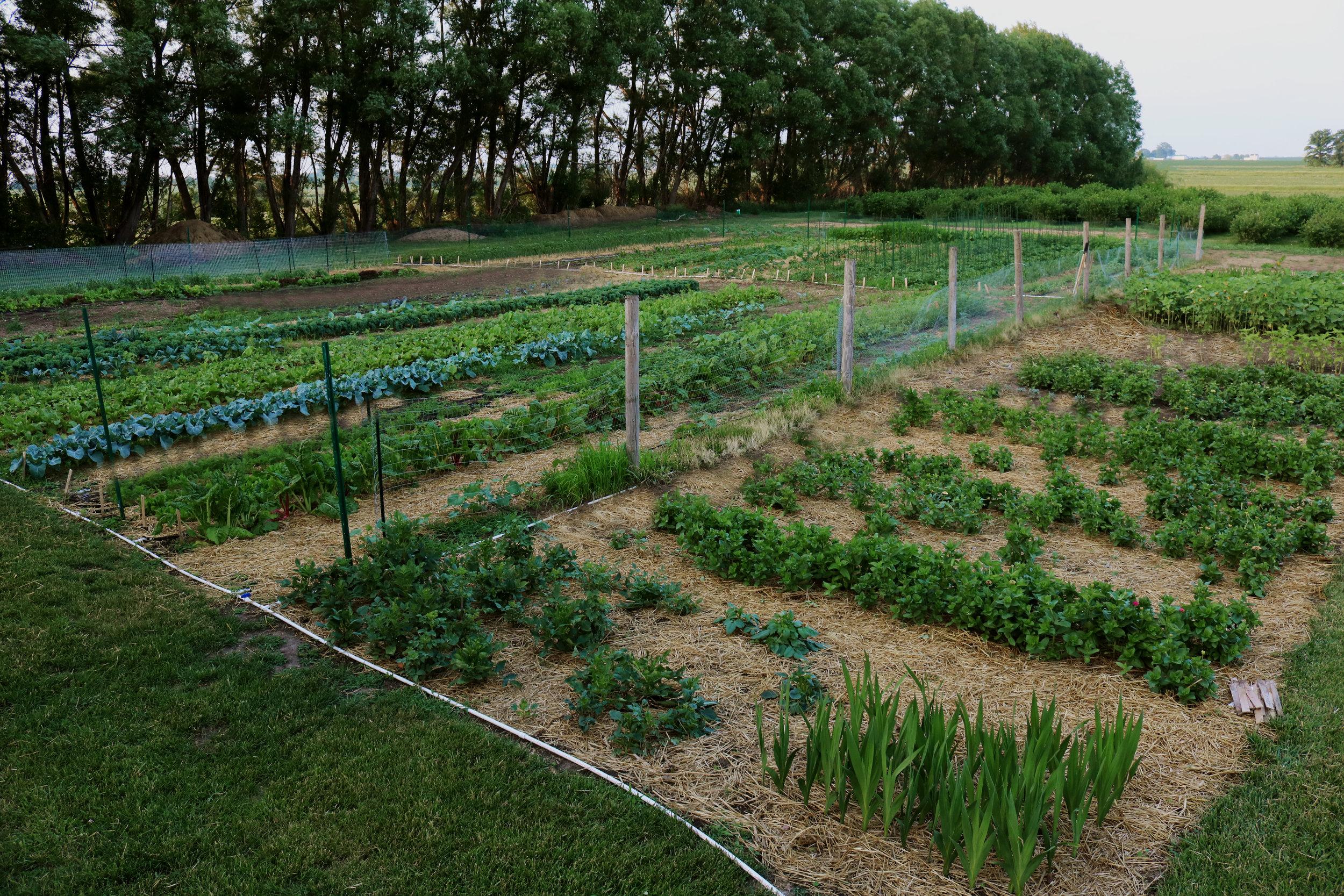 Homestead Update: Summer U-Picks and Farmer's Markets Galore - Under A Tin Roof Blog