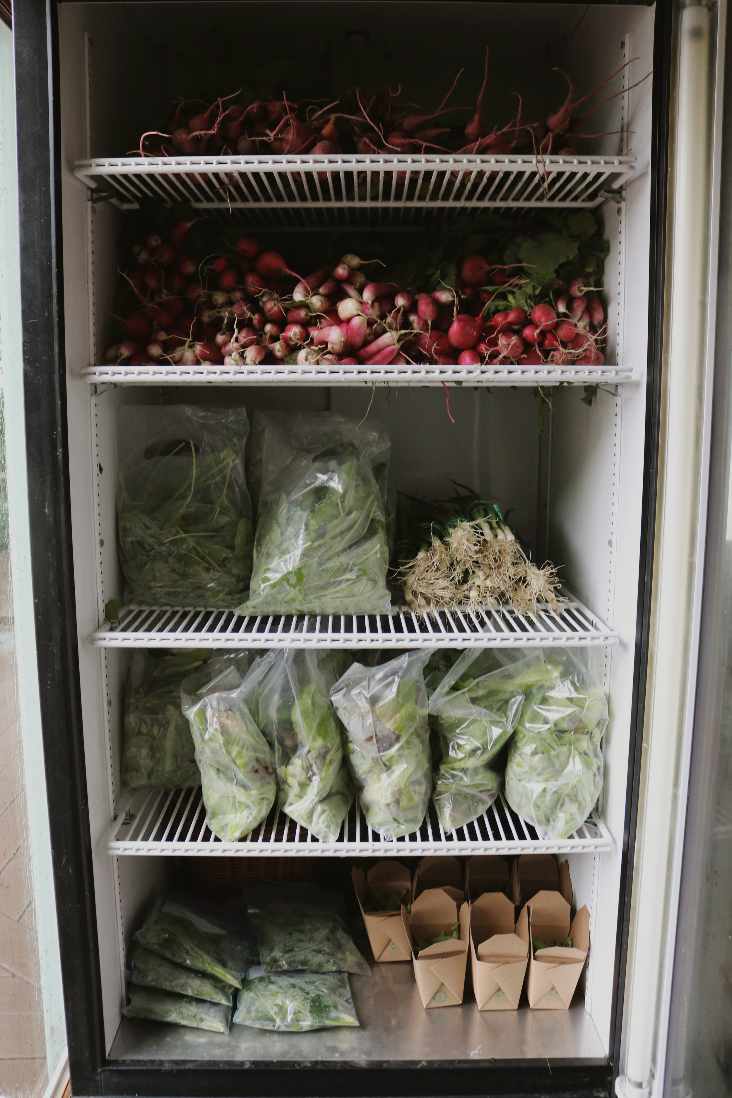 Our First Week of CSA! - Under A Tin Roof Blog