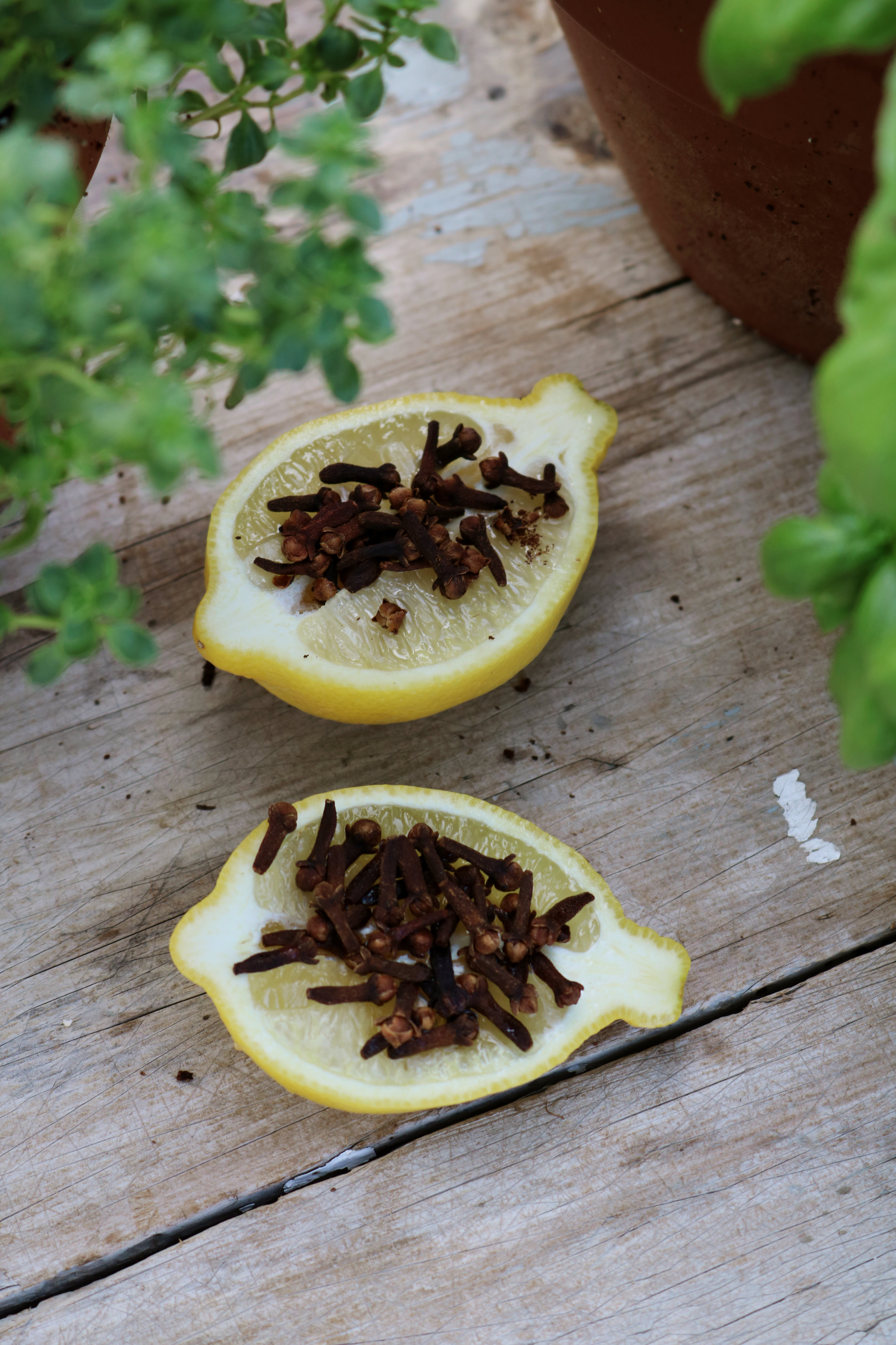 Keep Flies Away with Lemon and Cloves! - Under A Tin Roof Blog