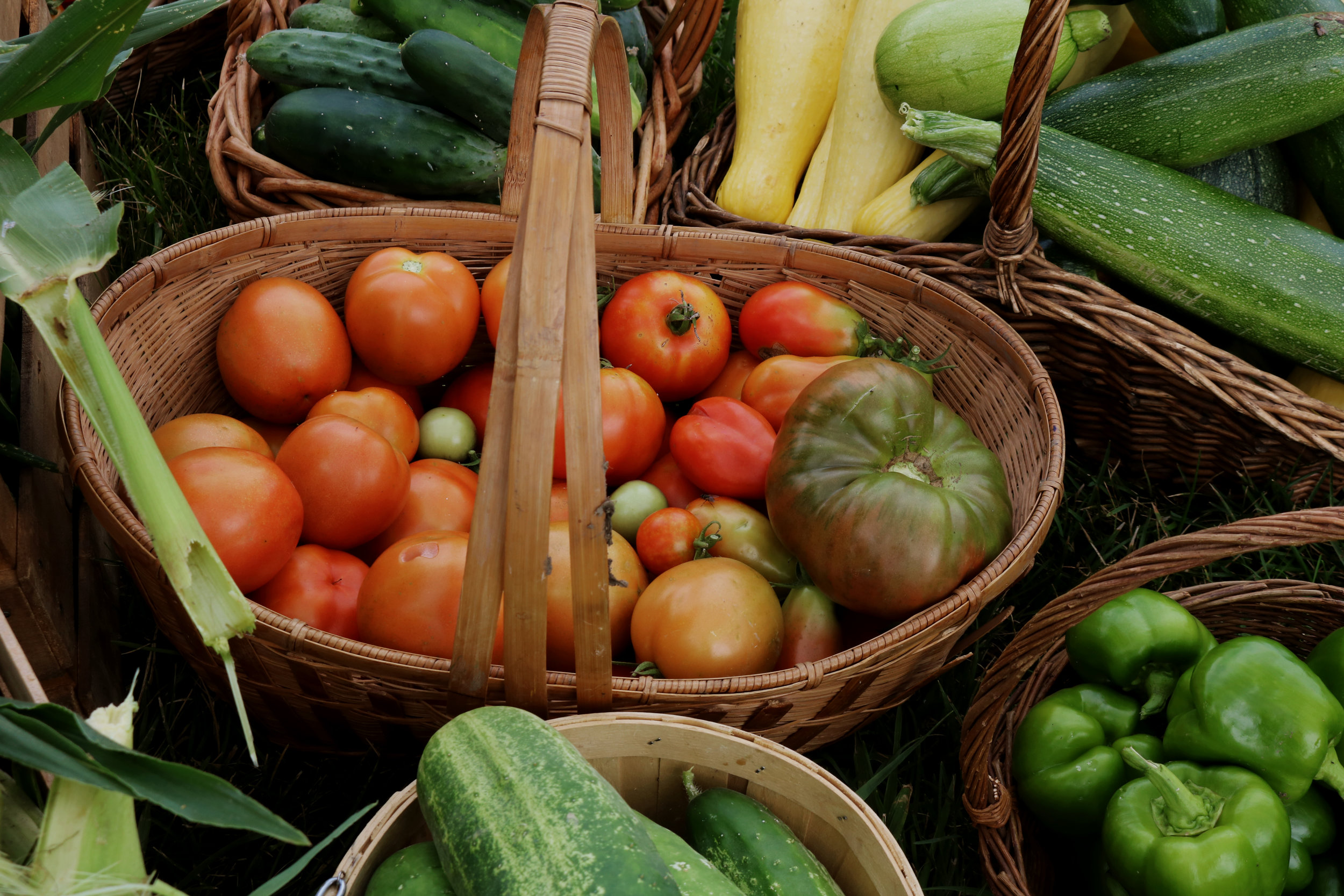 When to Harvest Various Vegetables - Under A Tin Roof Blog