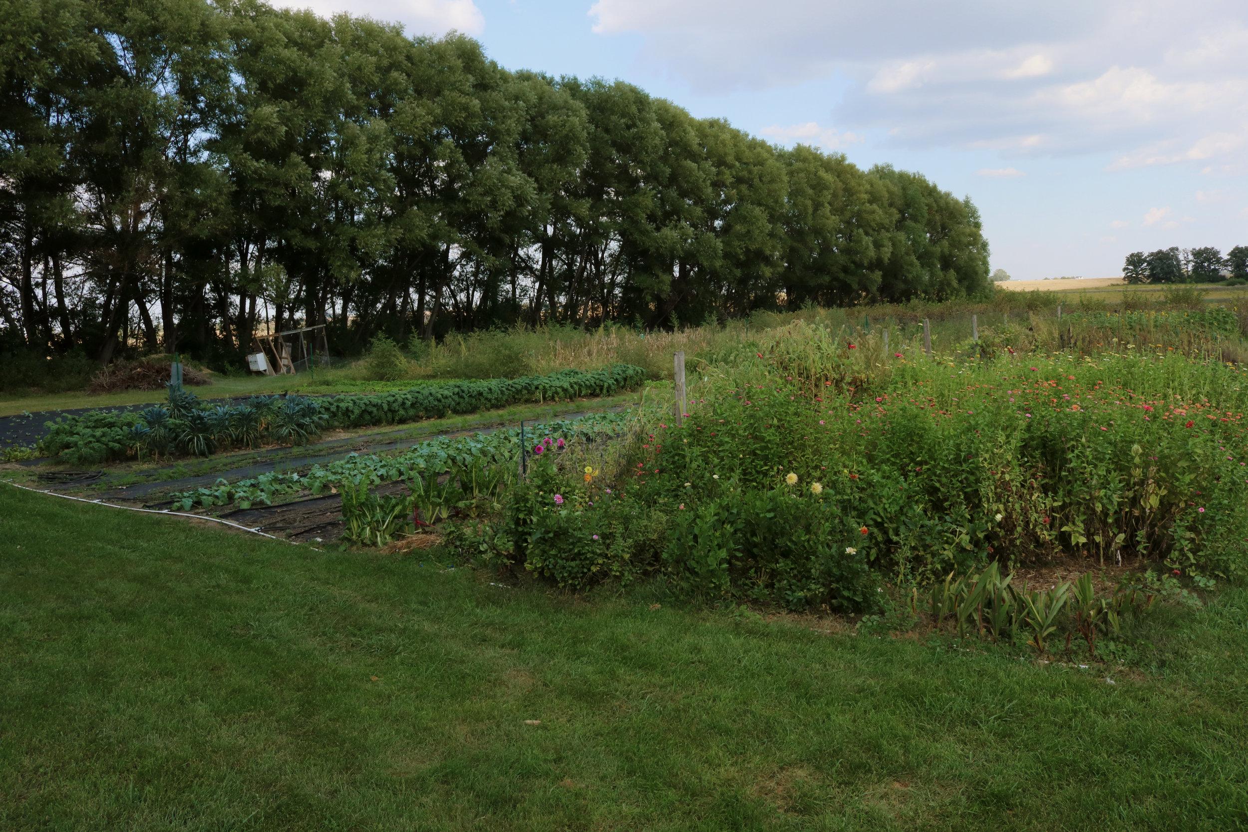 Homestead Update:  Indian Summer  - Under A Tin Roof Blog