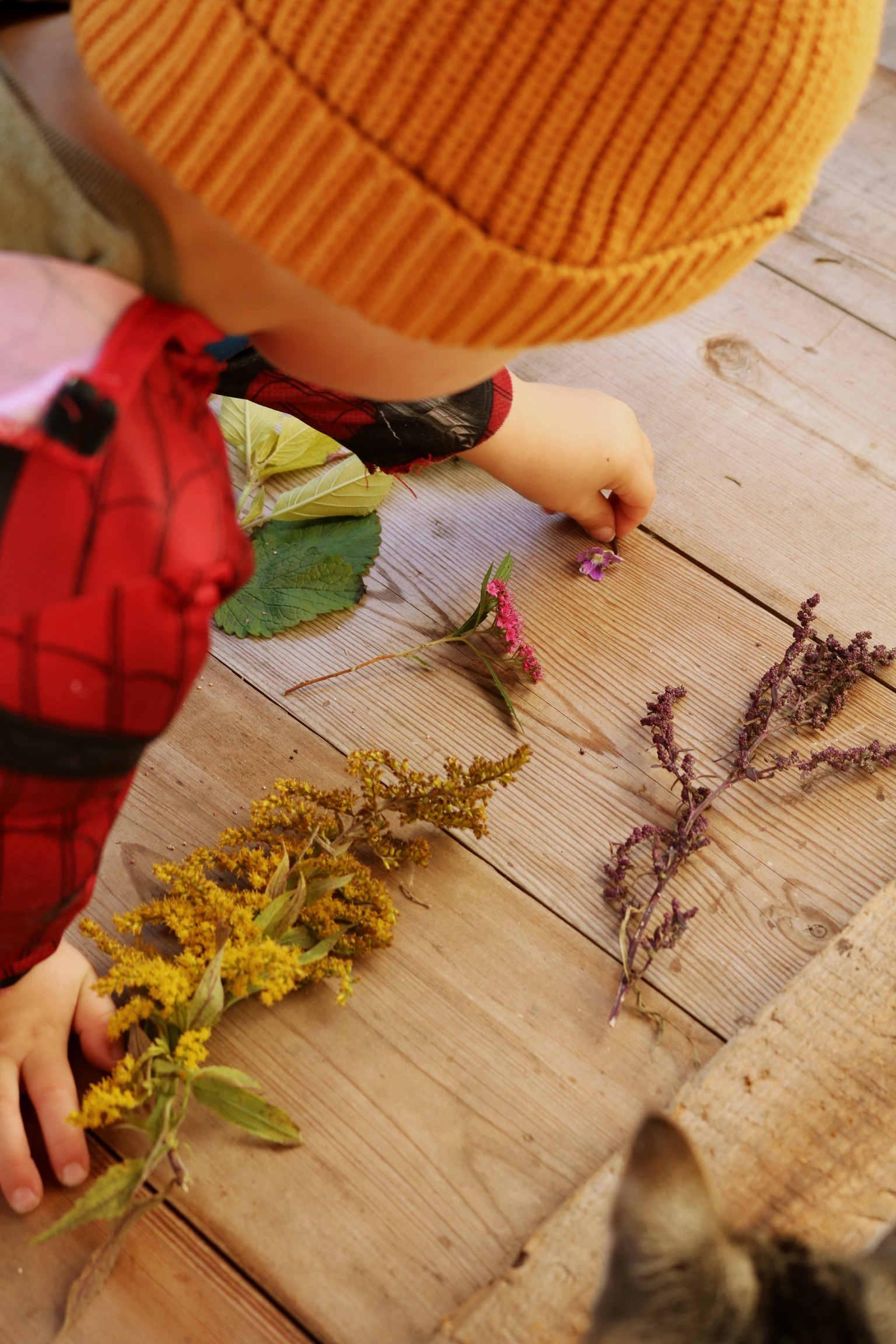 Foraging The Rainbow, a Nature School Activity - Under A Tin Roof Blog