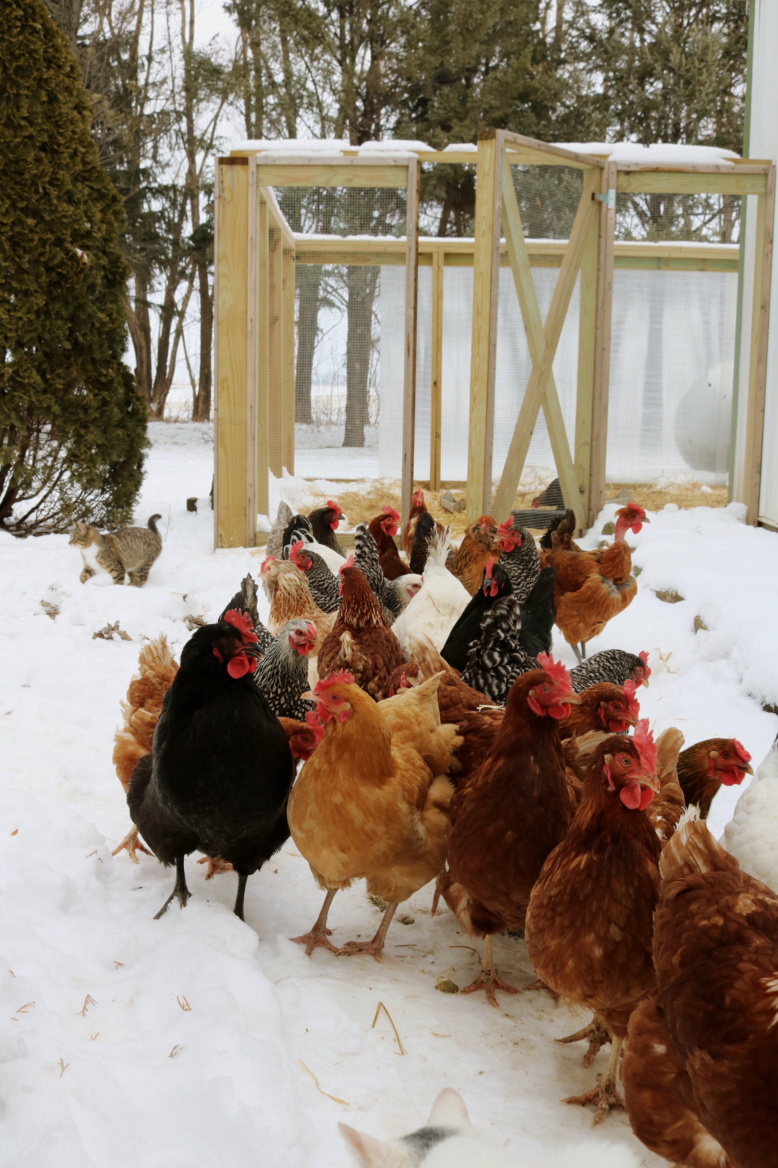Homestead Update: Entering Mid-Winter - Under A Tin Roof Blog