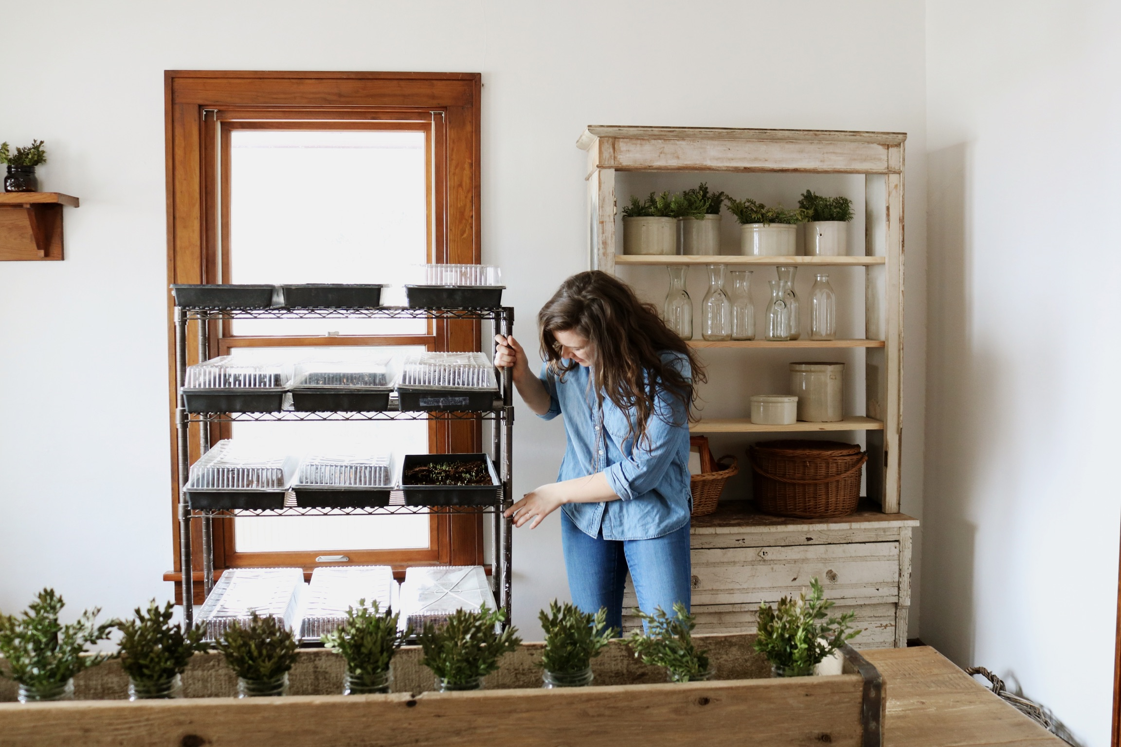 How to Start Seeds Without a Greenhouse on a Small Farm - Under A Tin Roof Blog