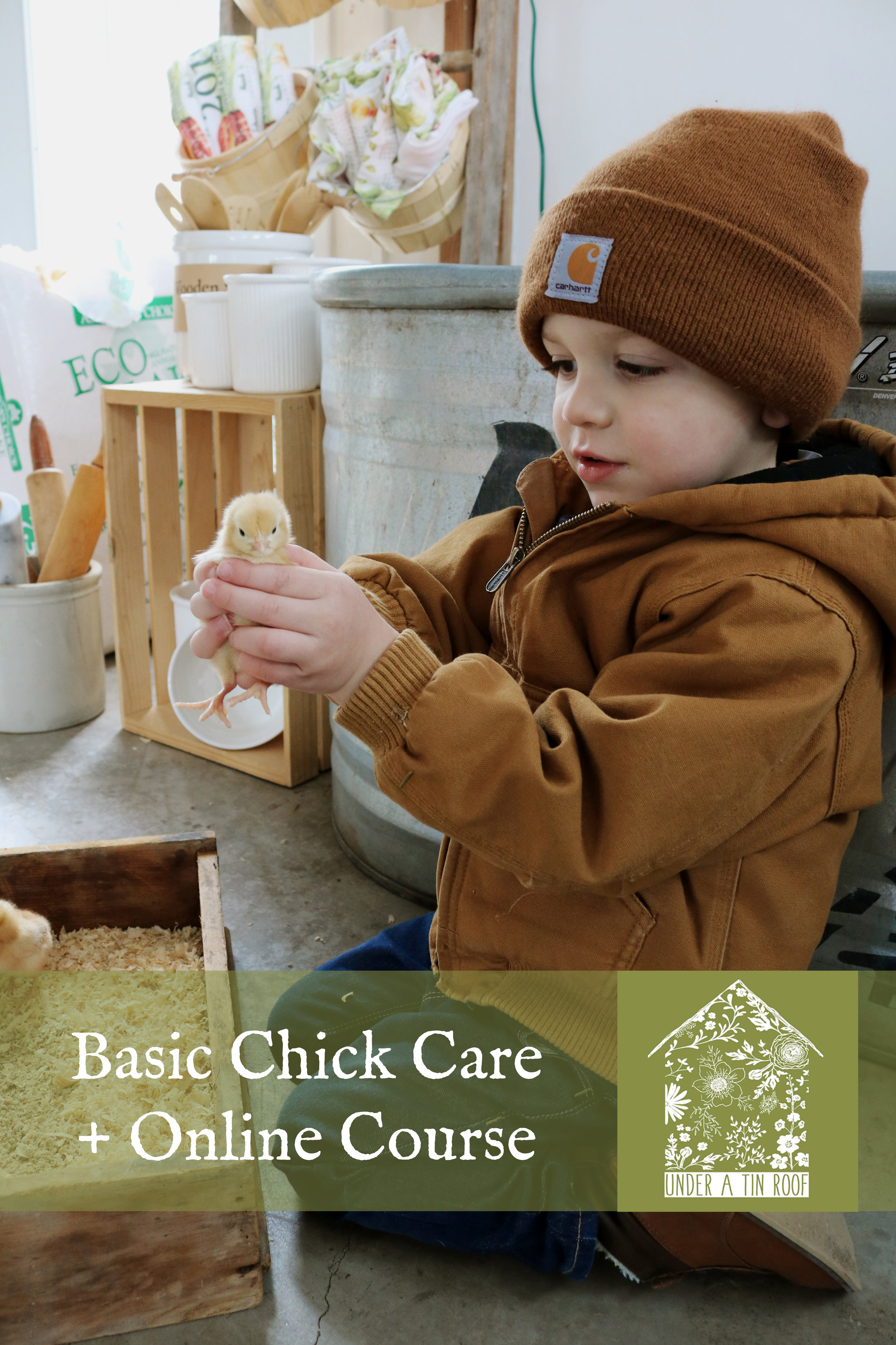Basic Chick Care - Under A Tin Roof Blog
