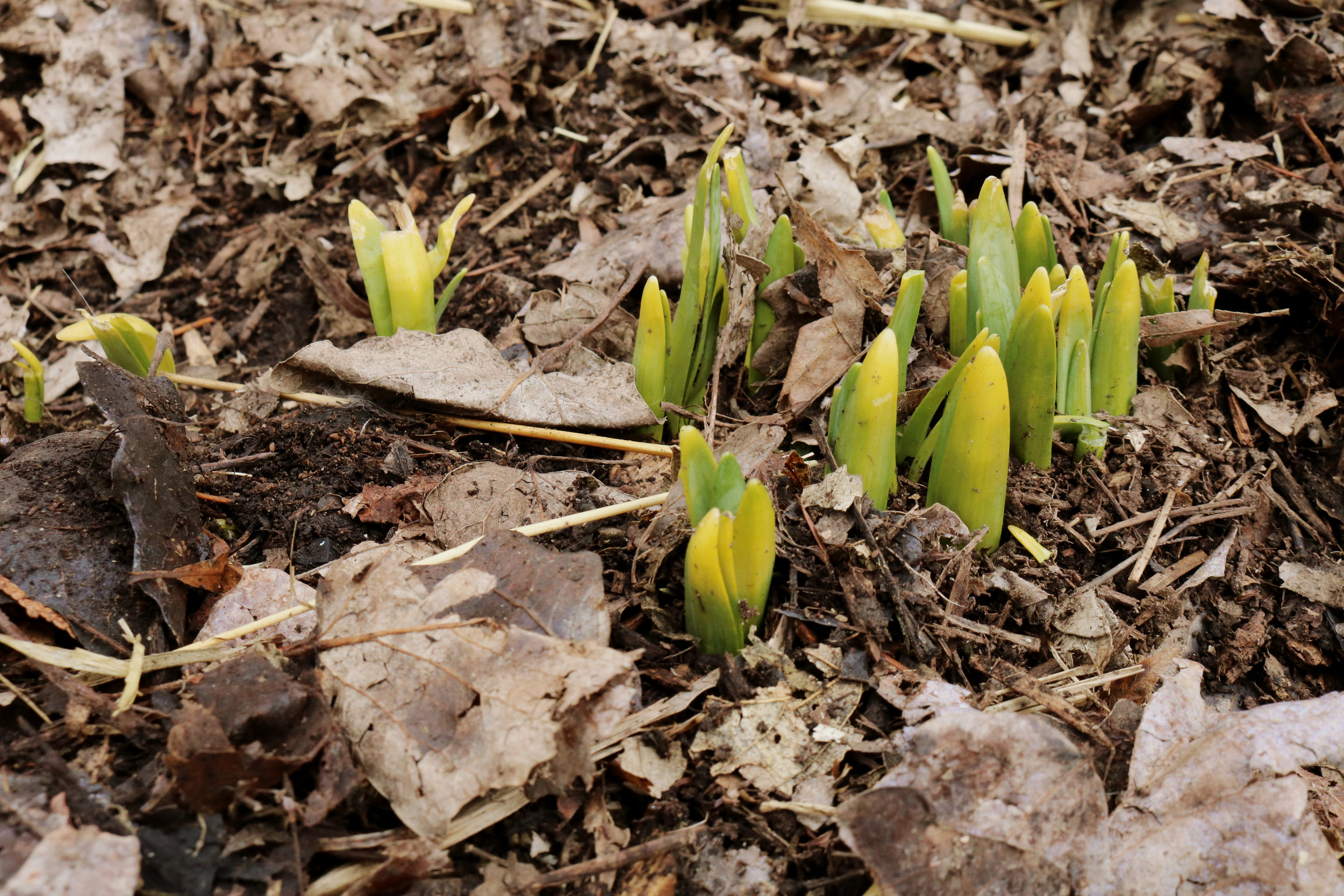 Homestead Update: Spring Has Sprung! - Under A Tin Roof Blog