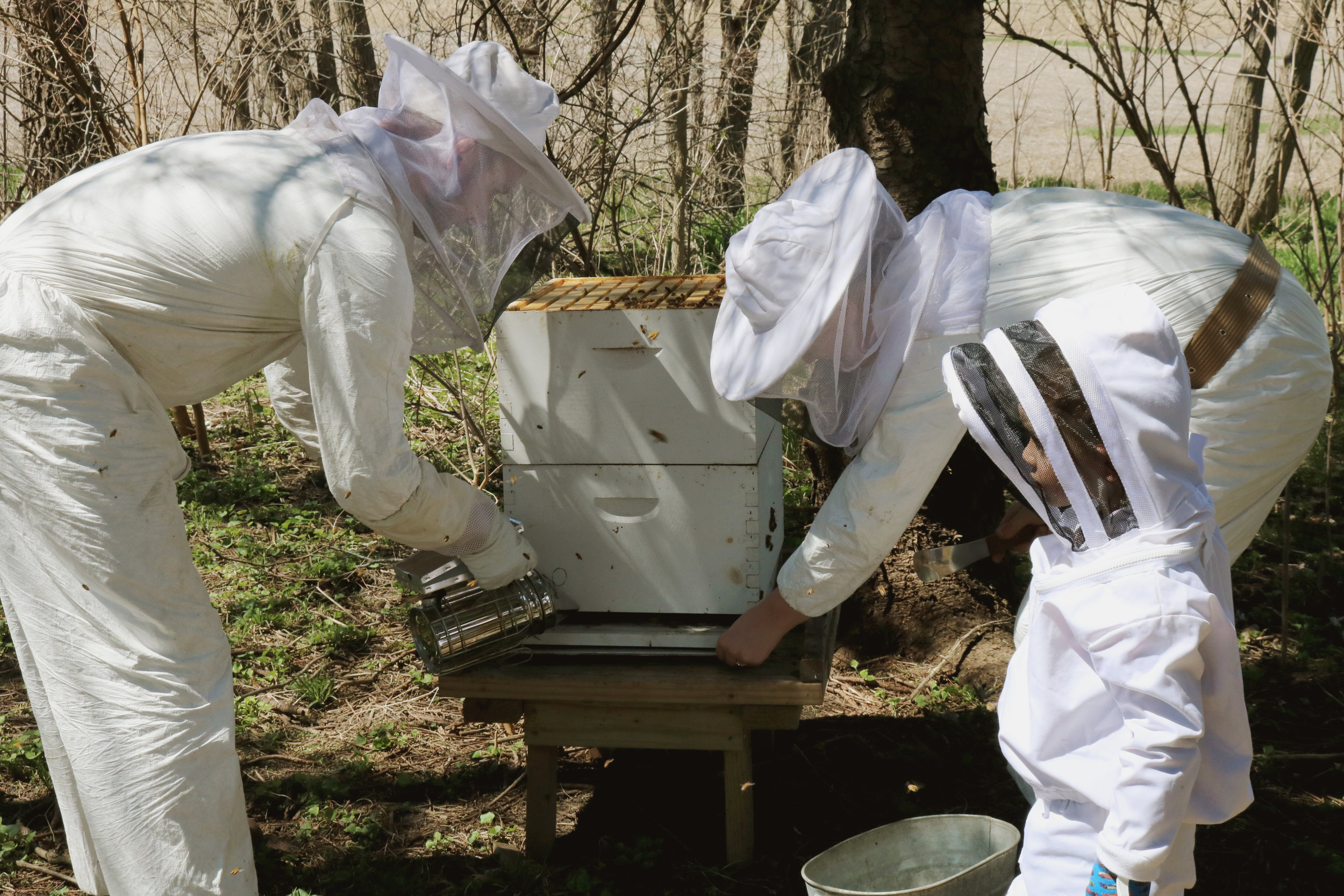 Our Spring Beekeeping Checklist - Under A Tin Roof Blog