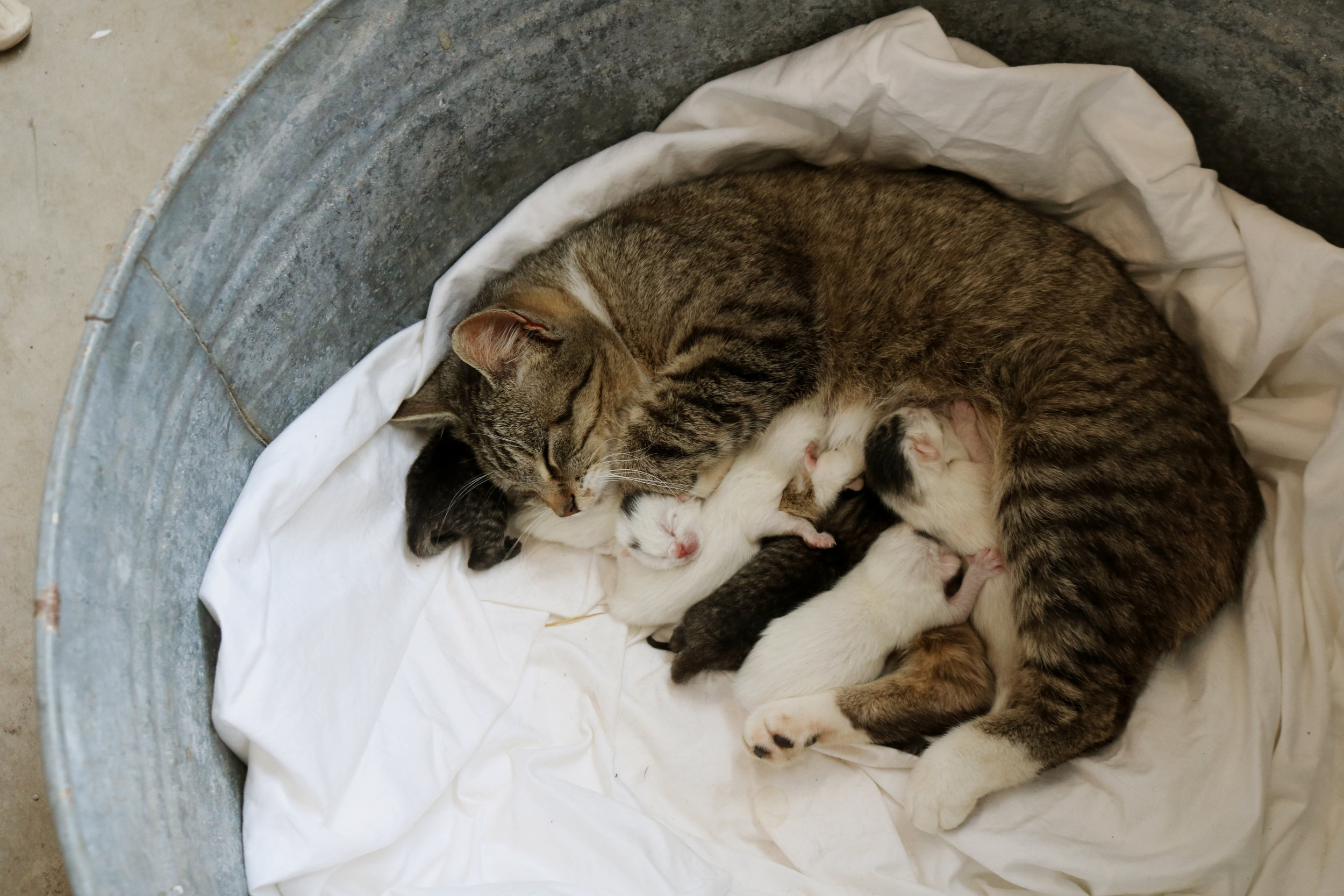 Homestead Update: Newborn Kittens and Time to Till! - Under A Tin Roof Blog