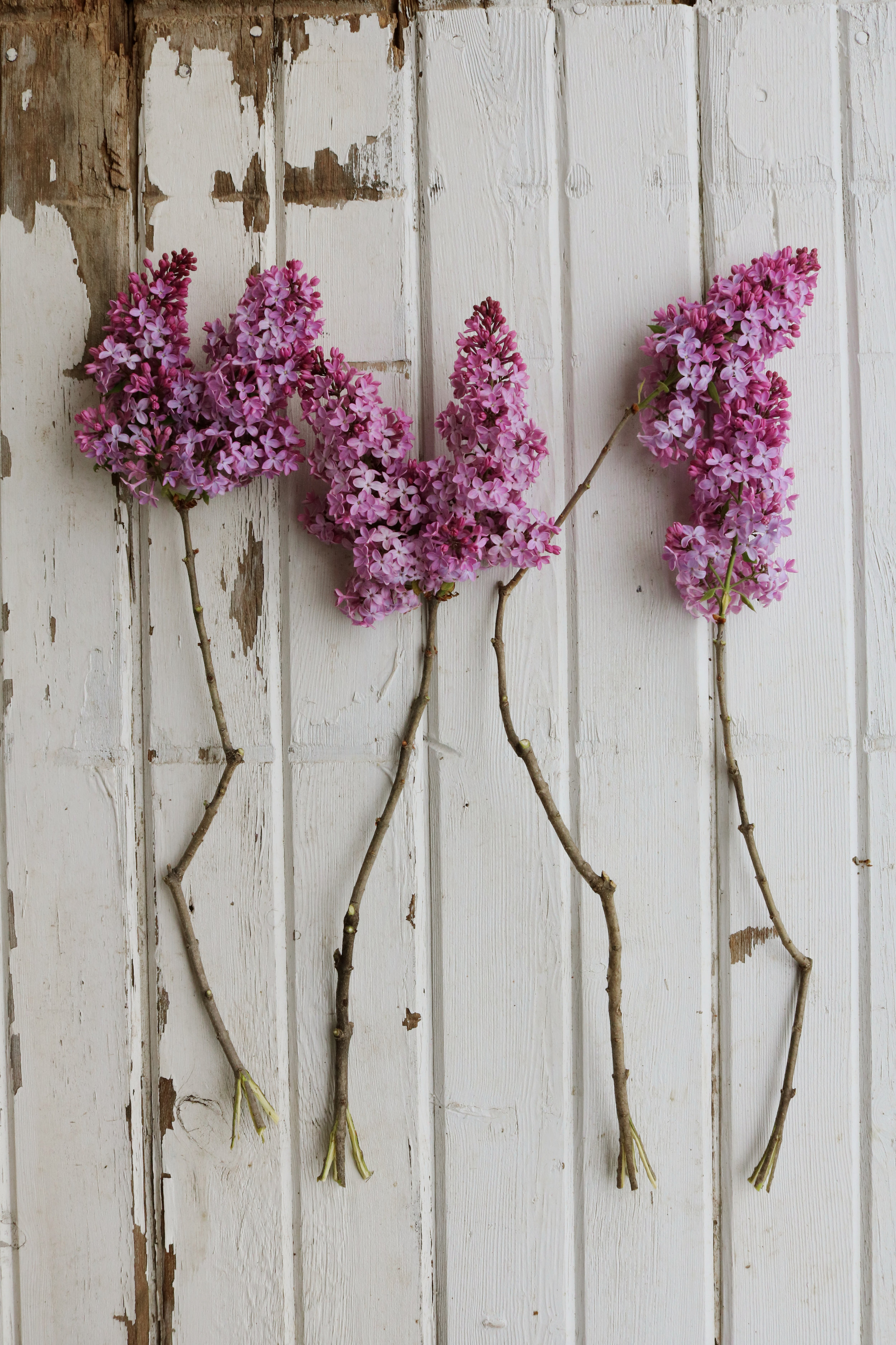 How to Harvest Lilacs - Under A Tin Roof Blog