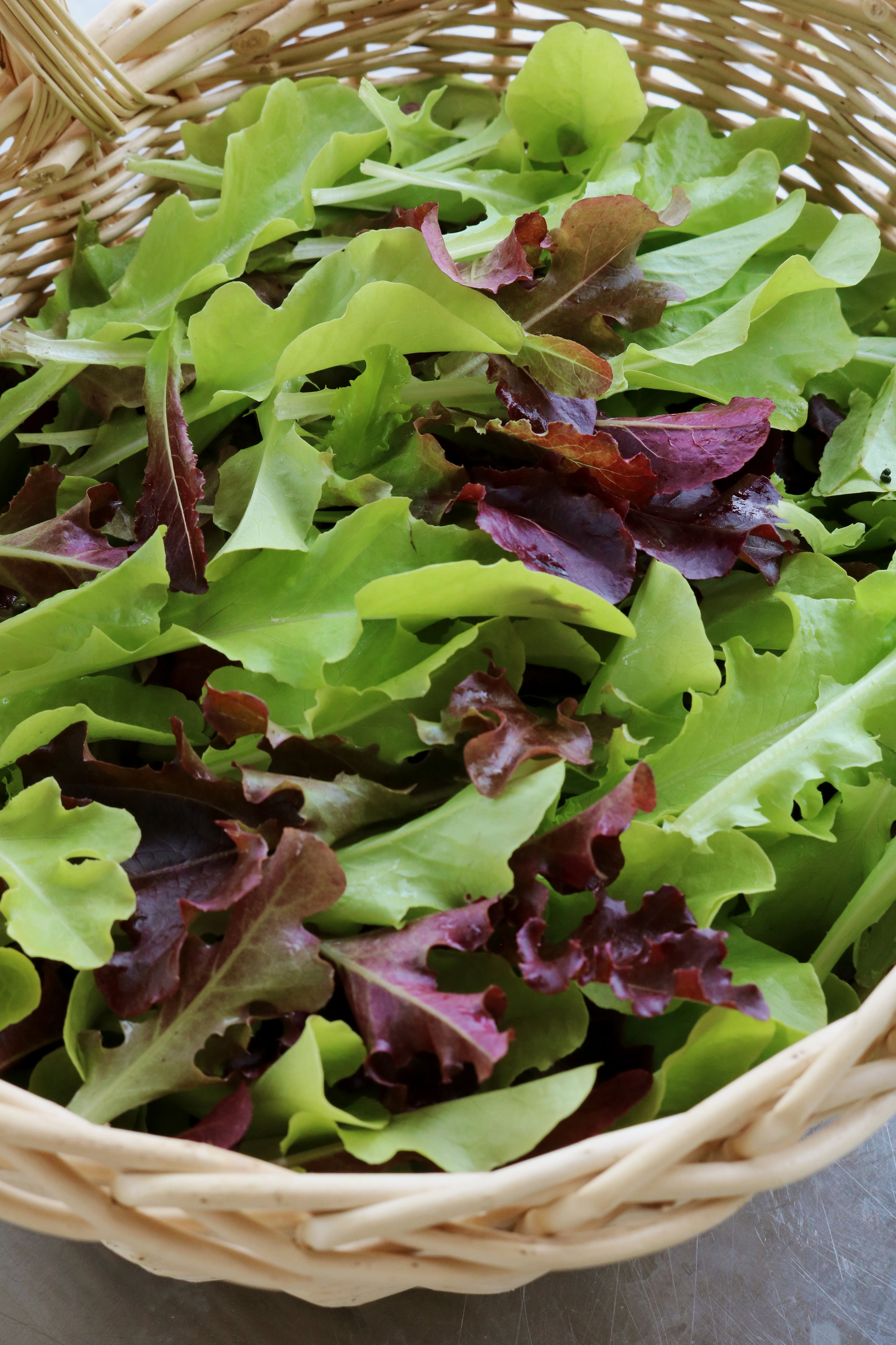 How to Harvest Salad Mix and Greens - Under A Tin Roof Blog