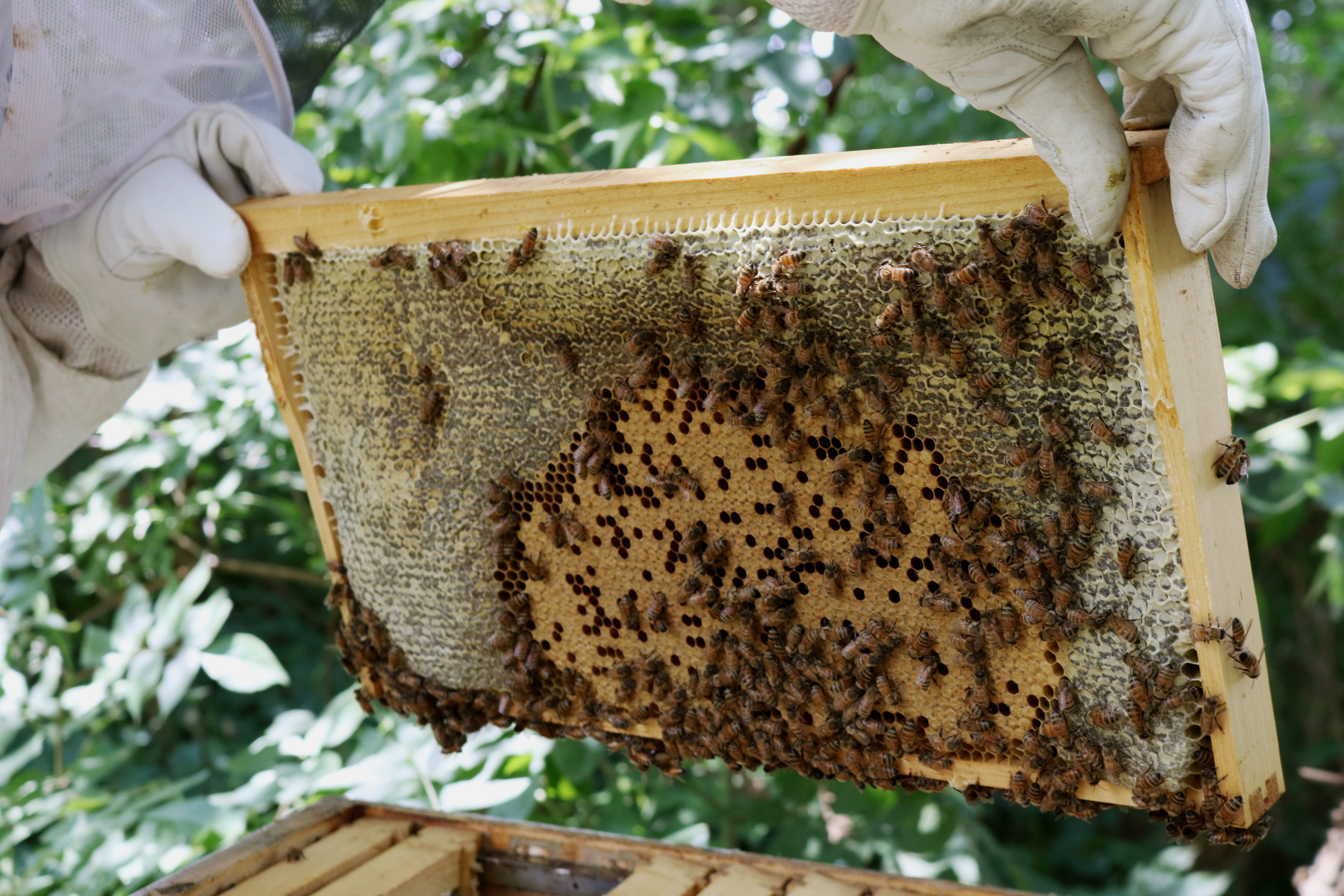 A Late Summer Hive Check - Under A Tin Roof Blog