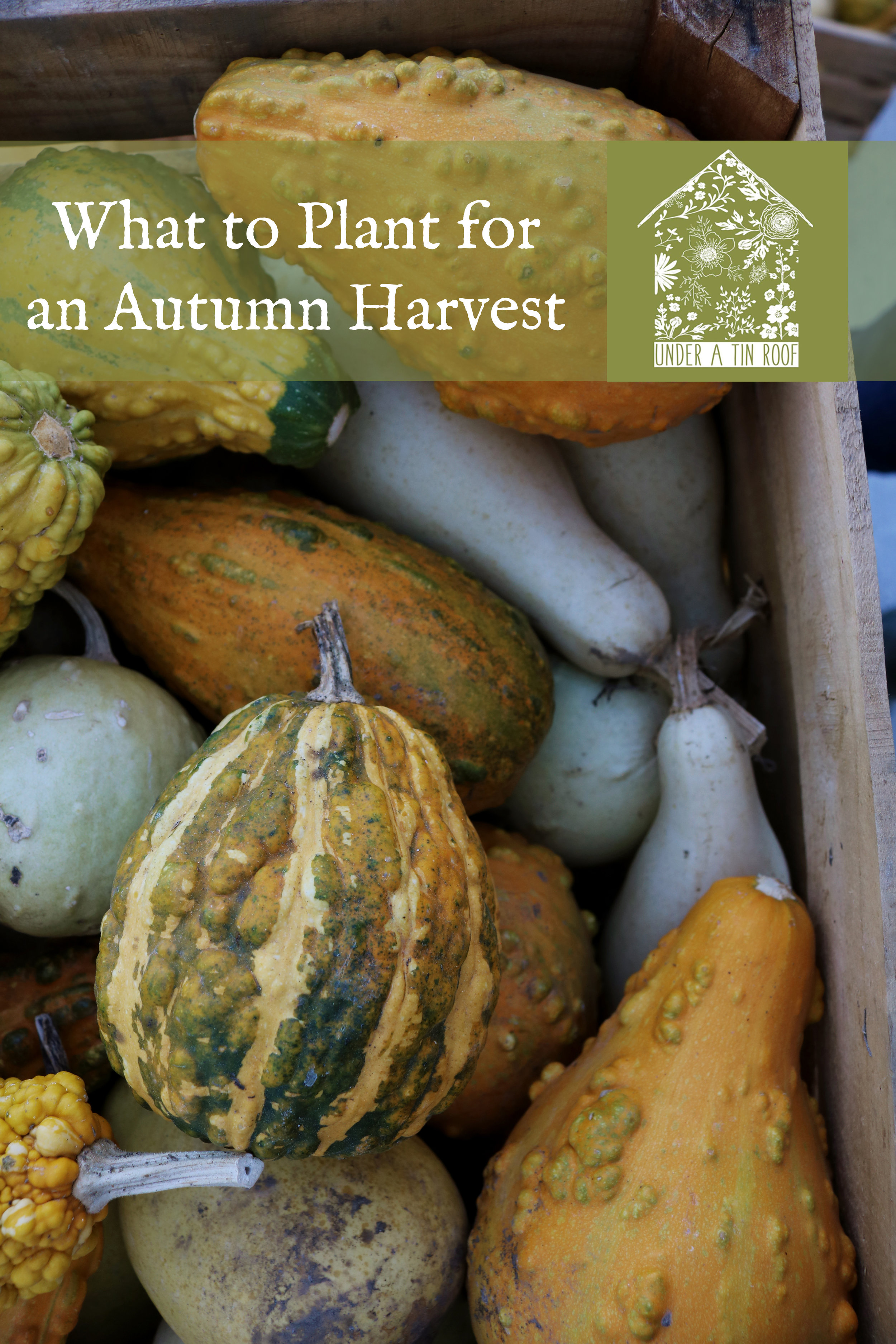 What to Plant Now for an Autumn Harvest - Under A Tin Roof Blog