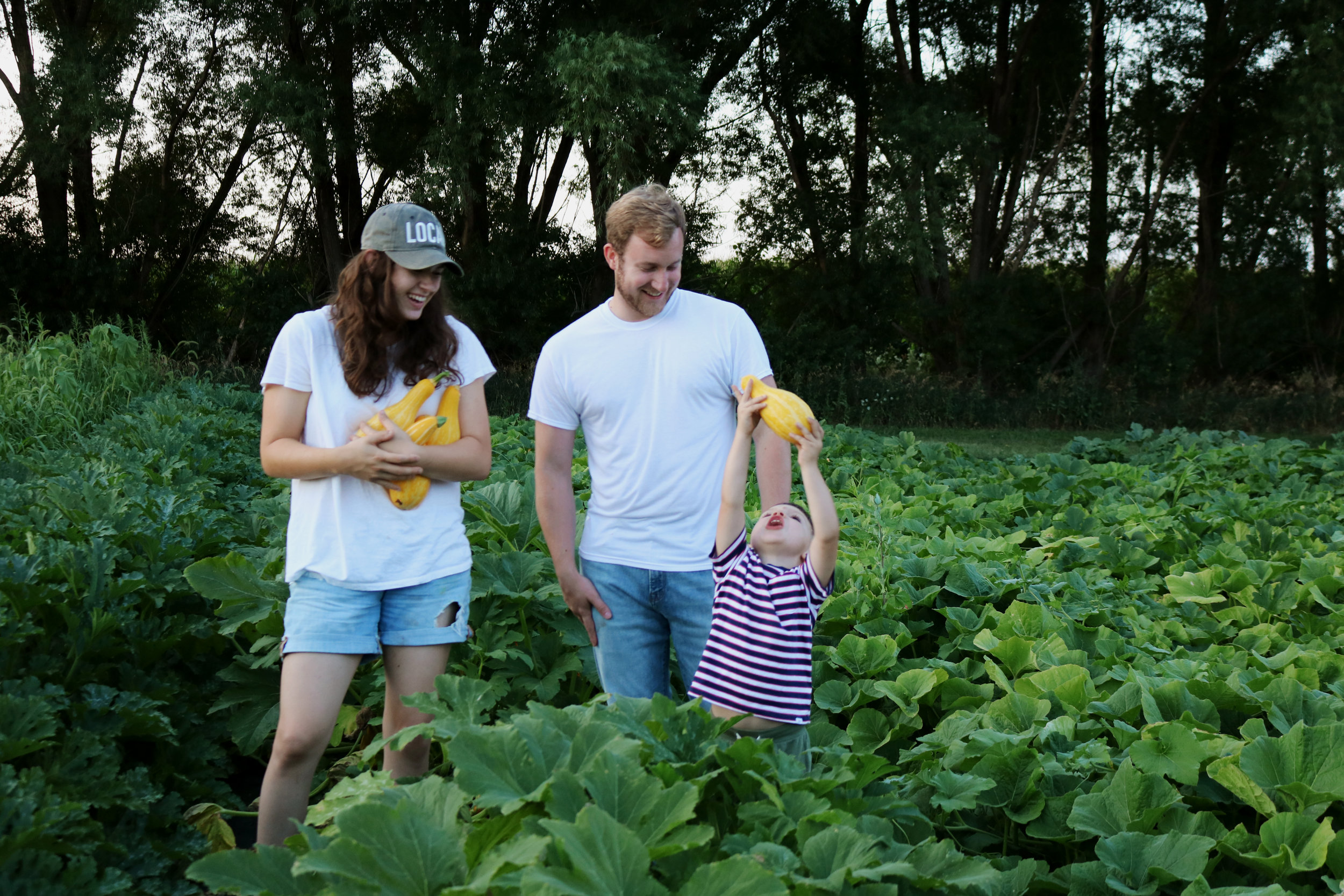 How to Grow and Harvest Summer Squash - Under A Tin Roof Blog