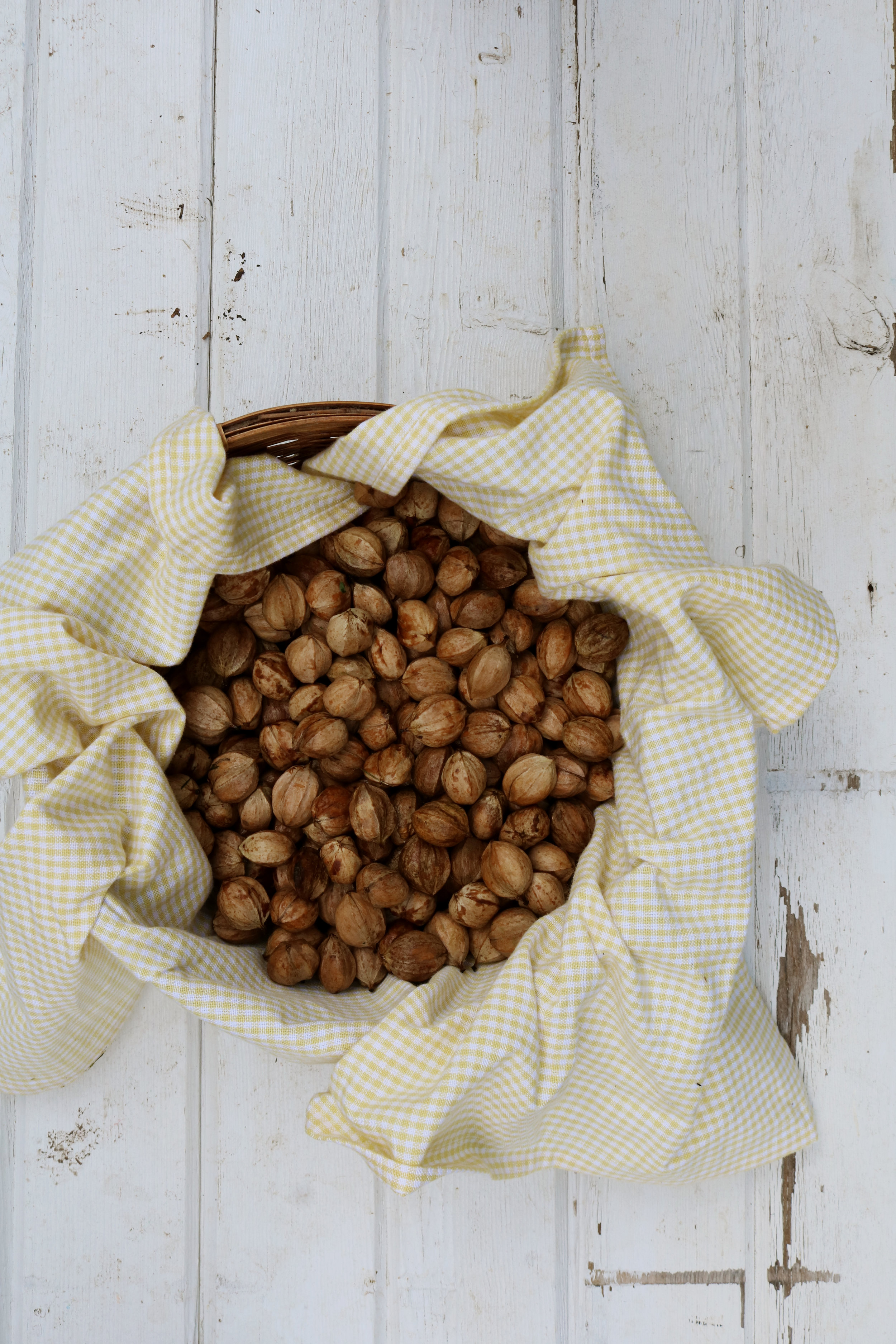 Collecting Hickory Nuts & How to Use Them - Under A Tin Roof Blog