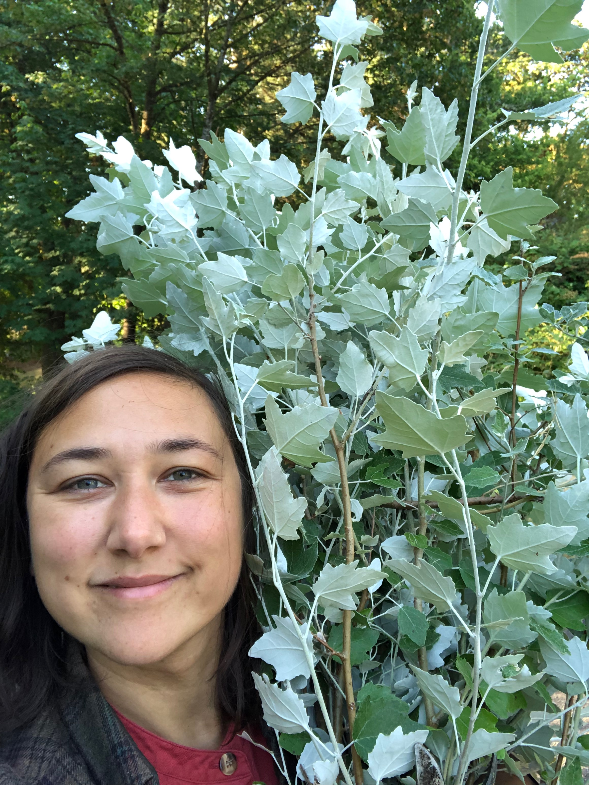 "Here, I bring in white poplar foliage from the yard. I love a ""yard haul"" best!"