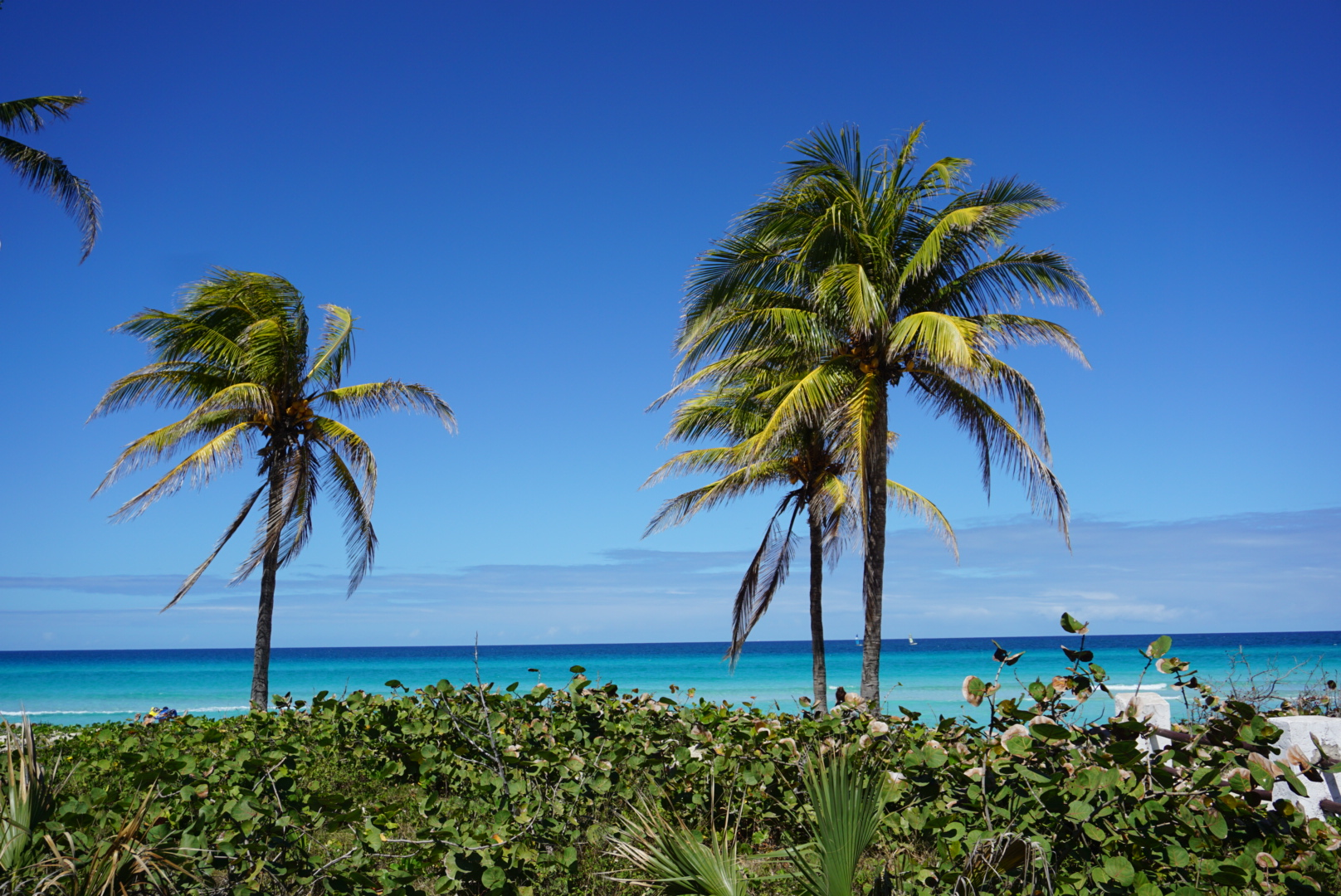 Beautiful Varadero Beach: crystal clear water and popular for water sports.