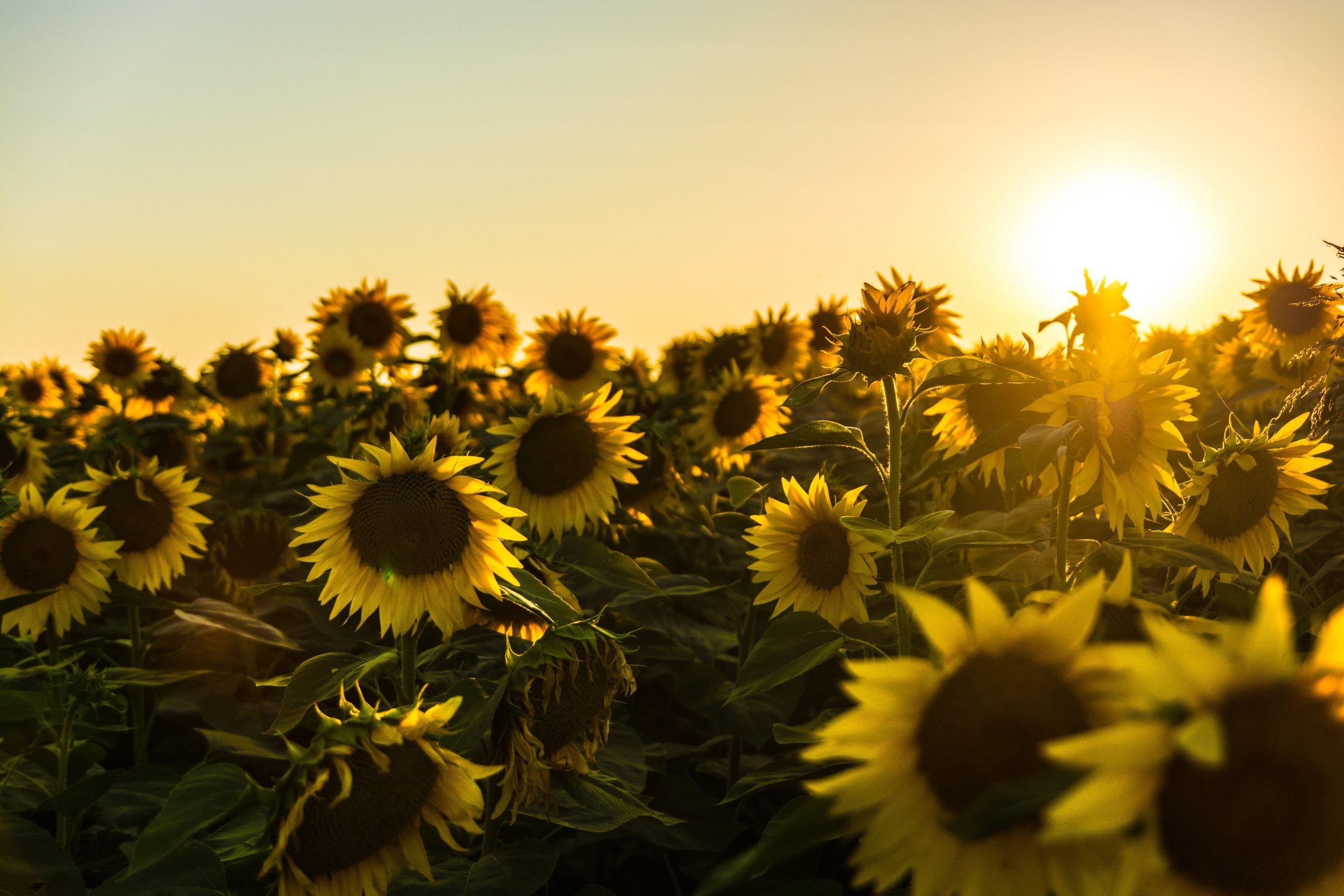 flowers in sunny field_unsplash.jpg