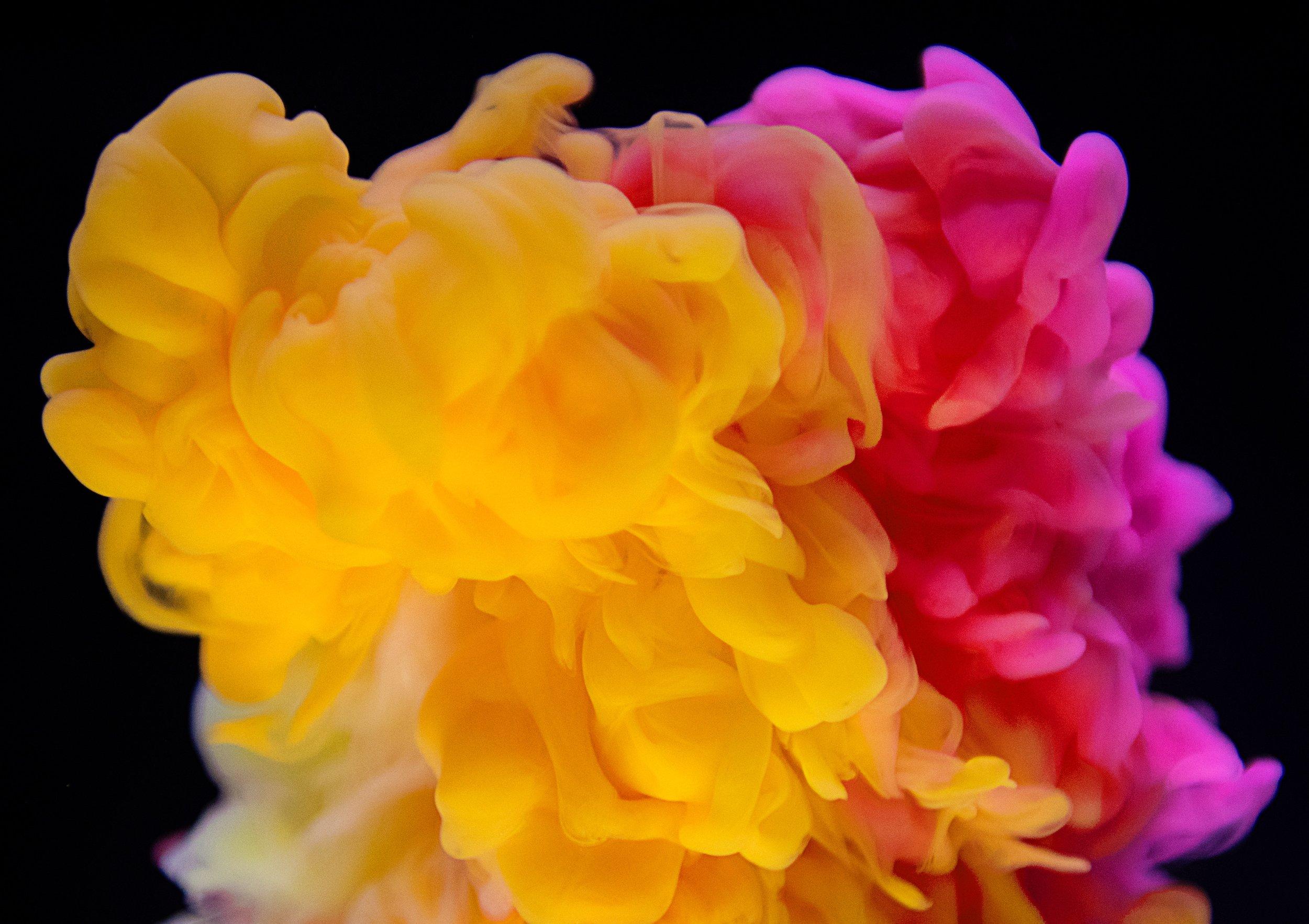 rawpixel-yellow and orange flourish_unsplash.jpg