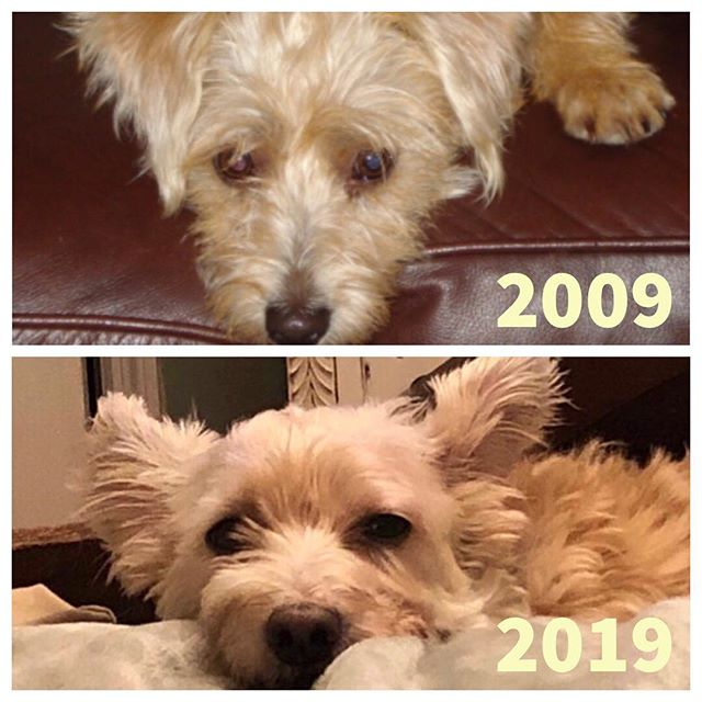 """Dolly """"Daddy's Girl"""" Williams — #10yearchallenge"""