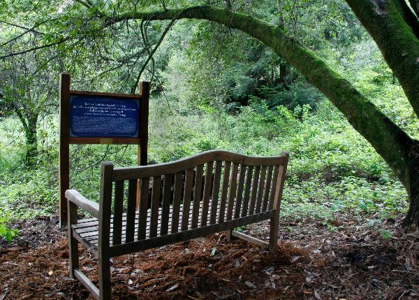 trail-2.jpg