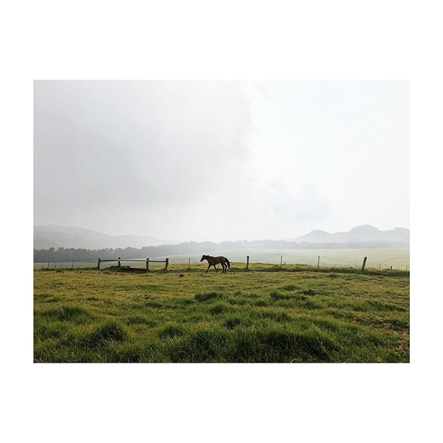Lone horse | Big Island of Hawai'i