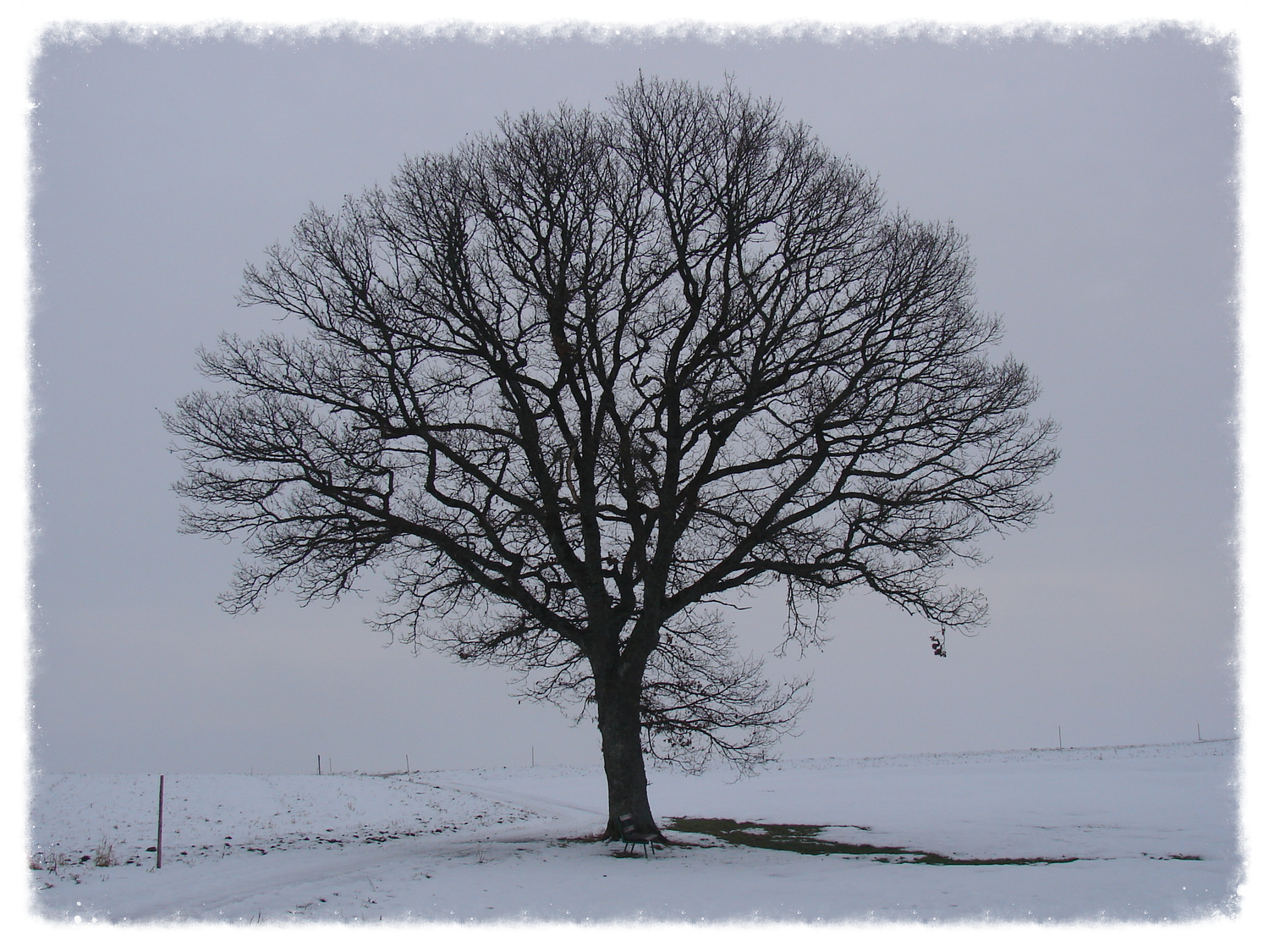"""""""Tree in winter time"""" by Norbert Utz (CC-BY-SA-3.0)"""