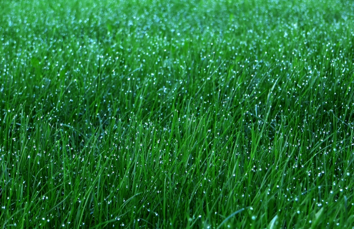 Grass photo: Sam DeLong via Flickr