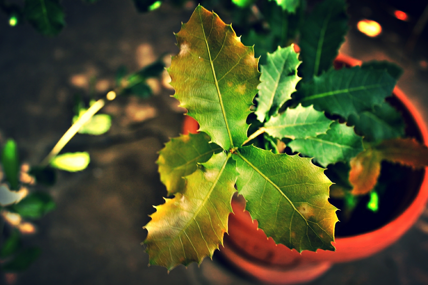 Oak saplings ready for planting. Photo by Rablem22 via Flickr