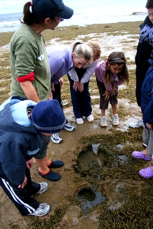 Discovering wildlife at Swan Bay