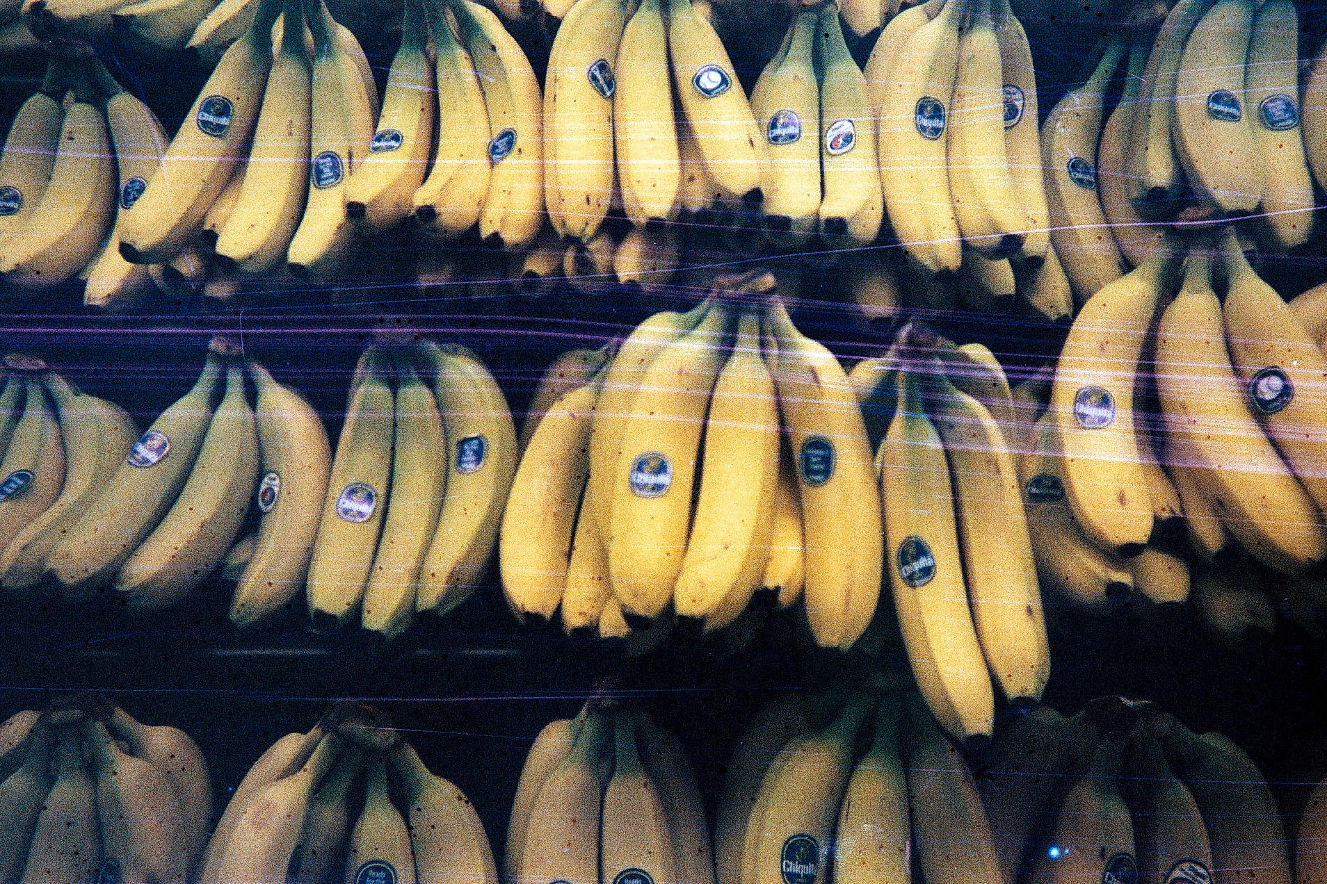 Electric Bananas.jpg