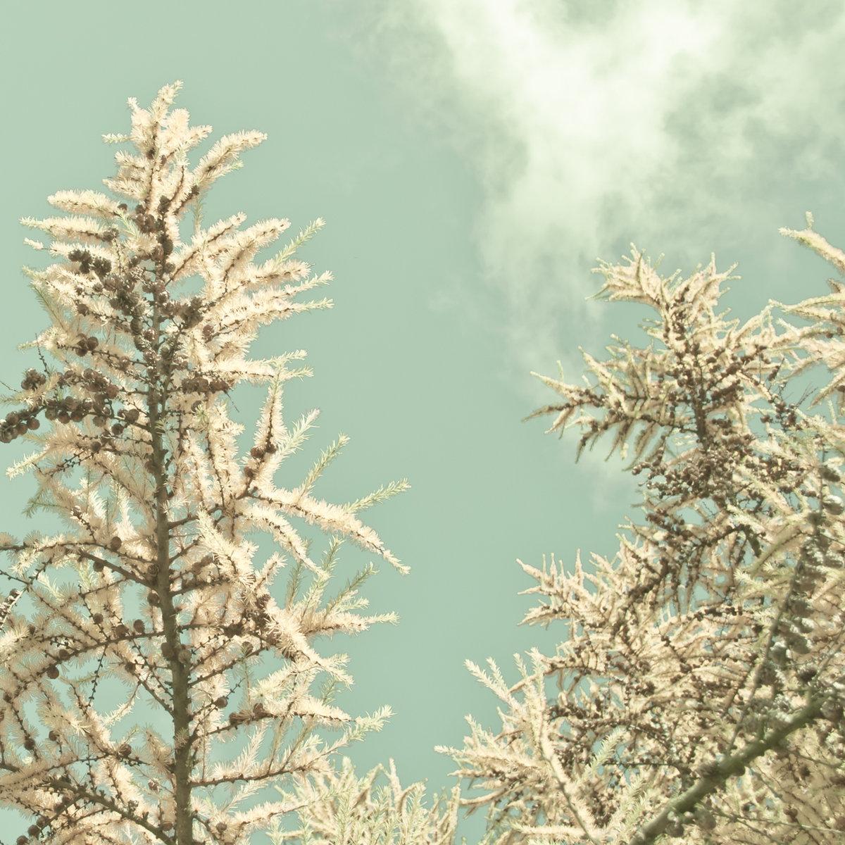"""暖かな季節(Warm Season)(2014) w/ Michiru Aoyama featured on tracks """"うつろい (Utsuroi)"""", """"わびさび (Wabi Sabi)"""" and """"好きは透明 (Clear and Restful)""""  organic industries #OI013 (Berlin)"""