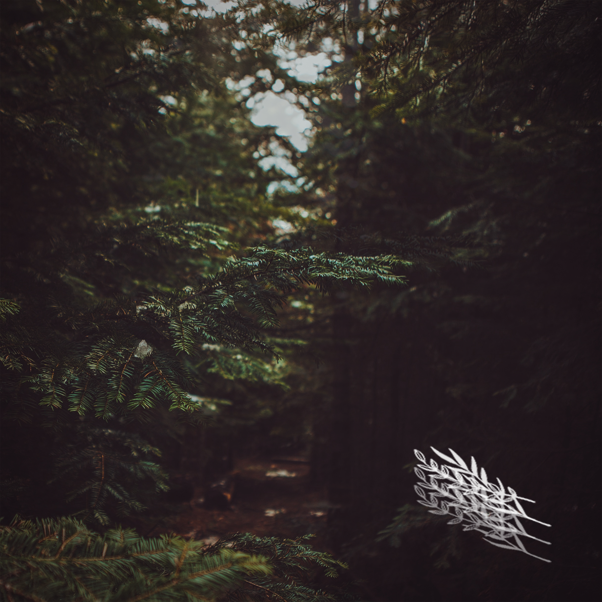 The Elia Passages  (2019)  Rural Sounds (RS004)  → listen/buy