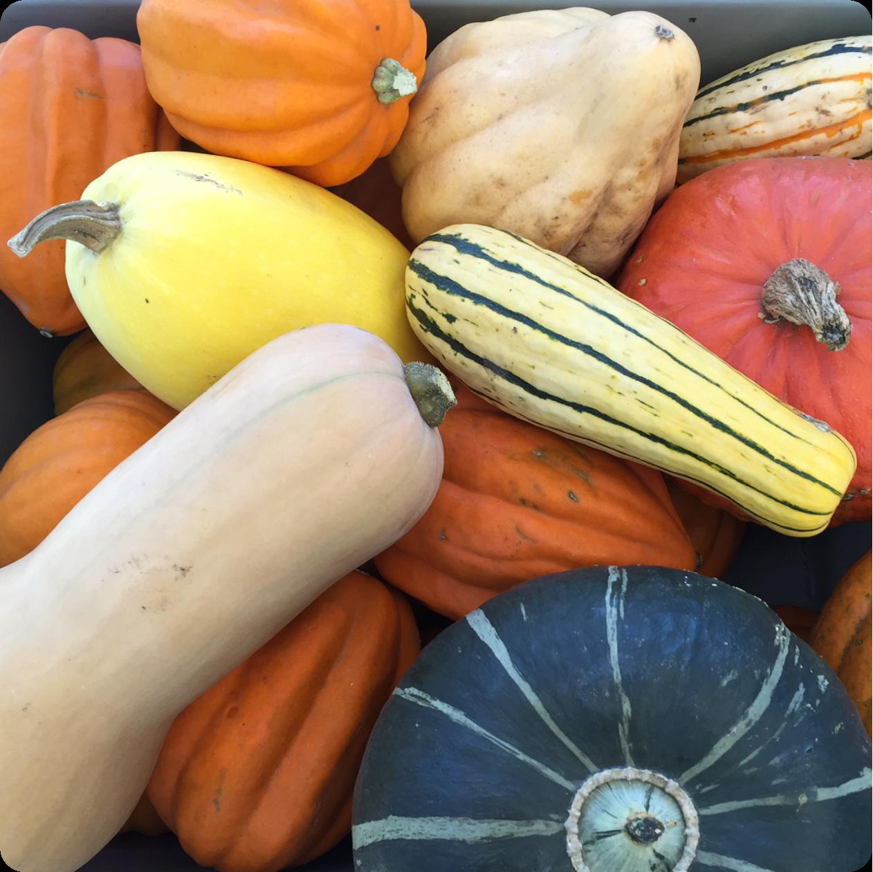 SQUASH...We have the fall favorites – spaghetti, acorn, butternut & delicata.