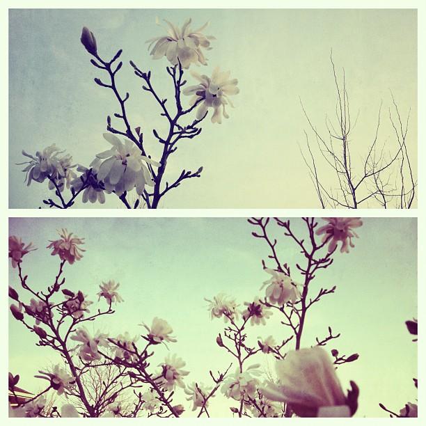 2012-03-25_1332634348.jpg