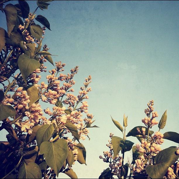 2012-04-09_1333933507.jpg