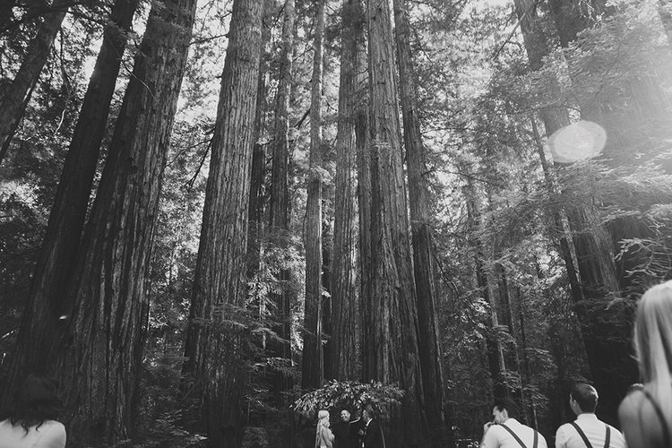Armstrong National Forest Wedding92.jpg