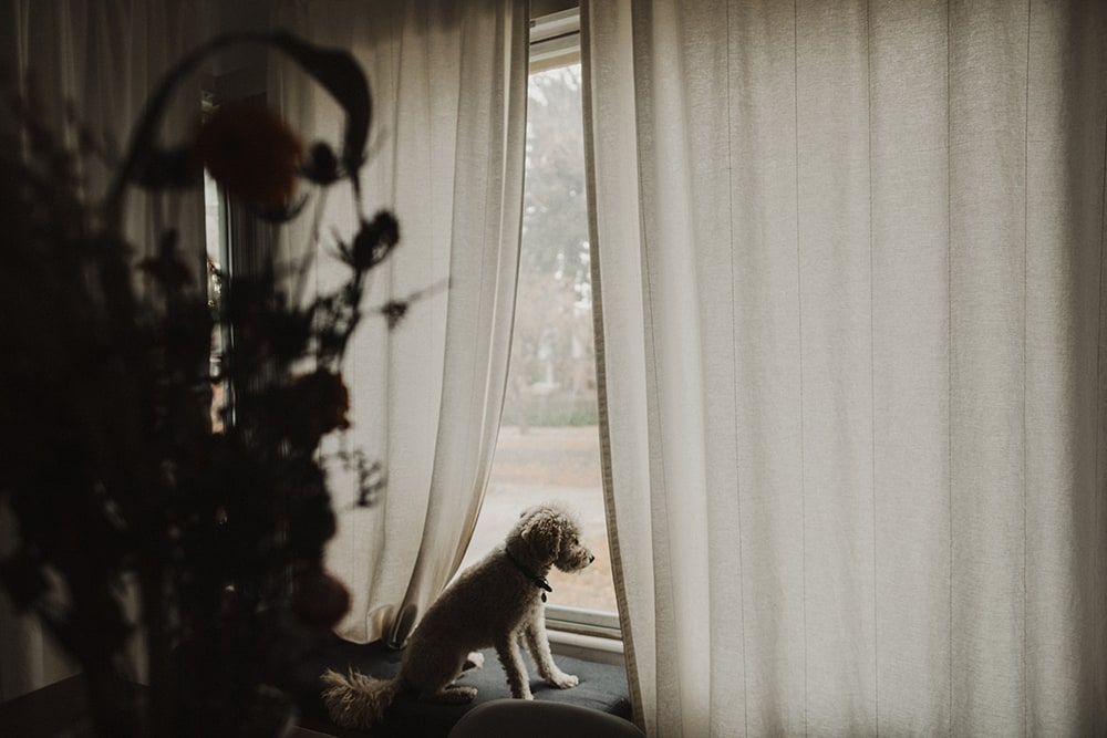 dog looking out at street waiting for owner