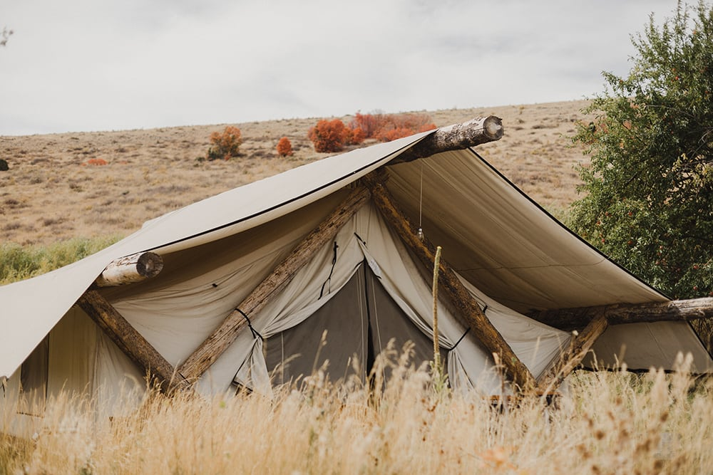 Tent with weeds and fall backdrop
