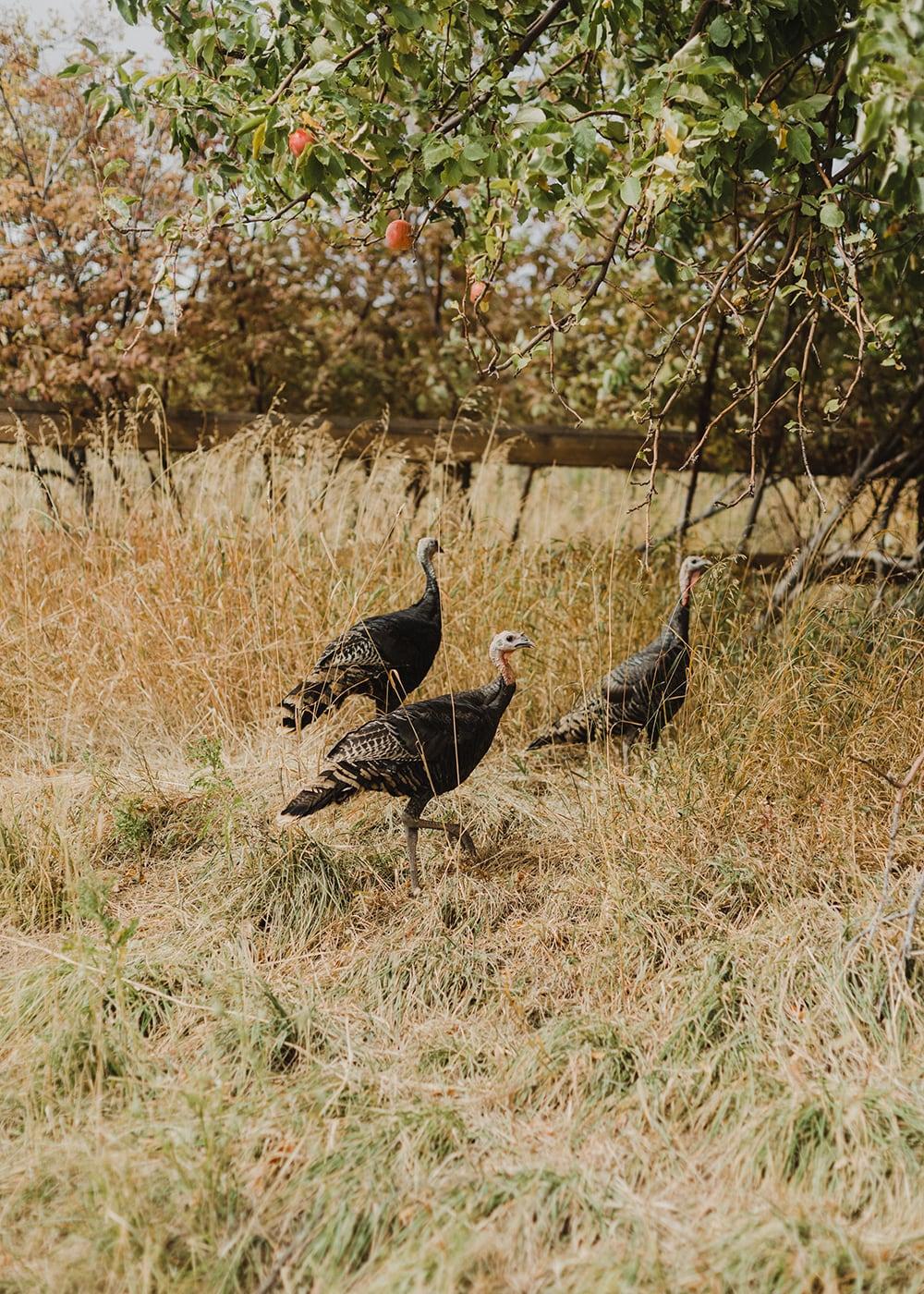 Conestoga Ranch Wedding Utah2.jpg