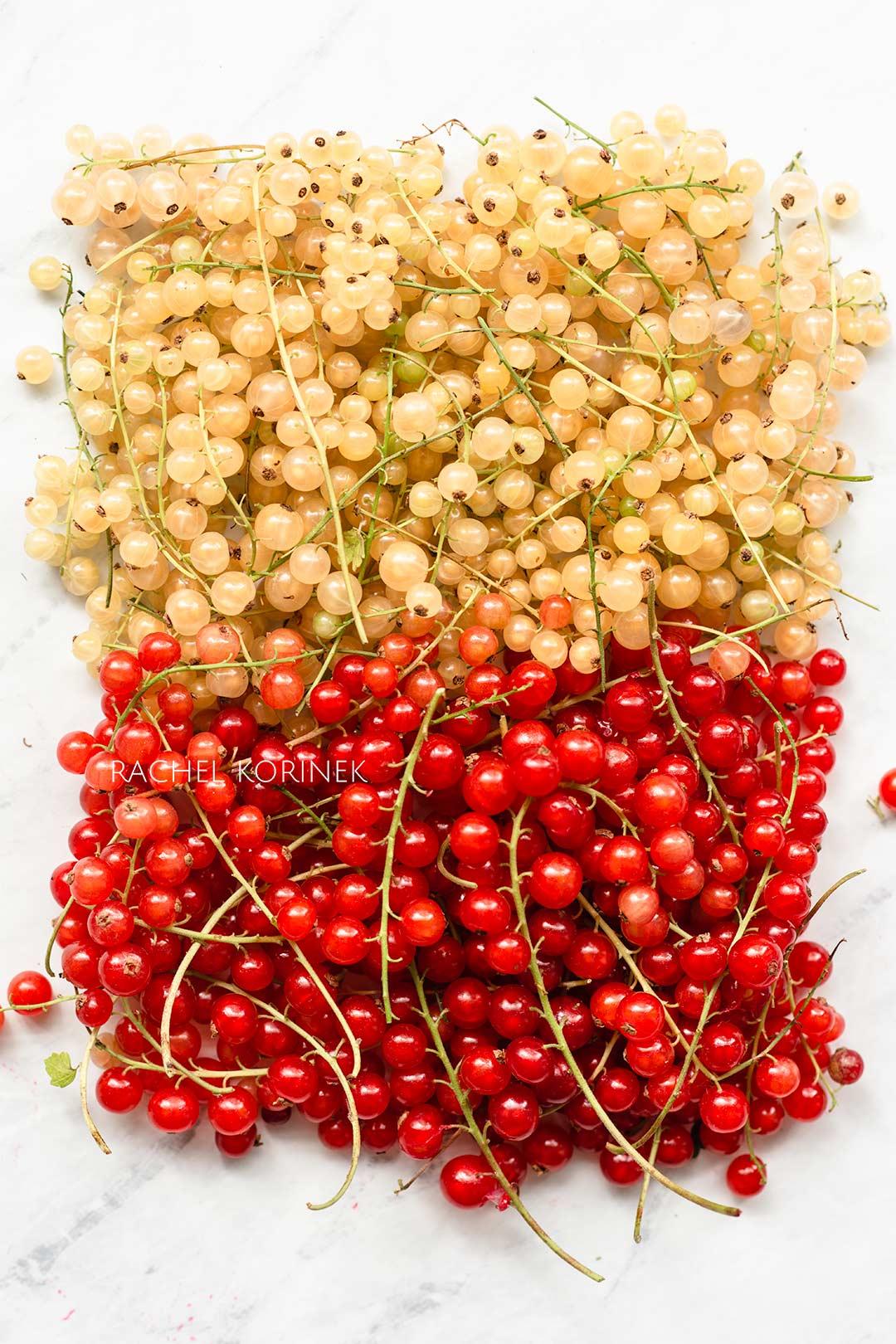 Rachel Korinek Food Photographer | Red White Currants
