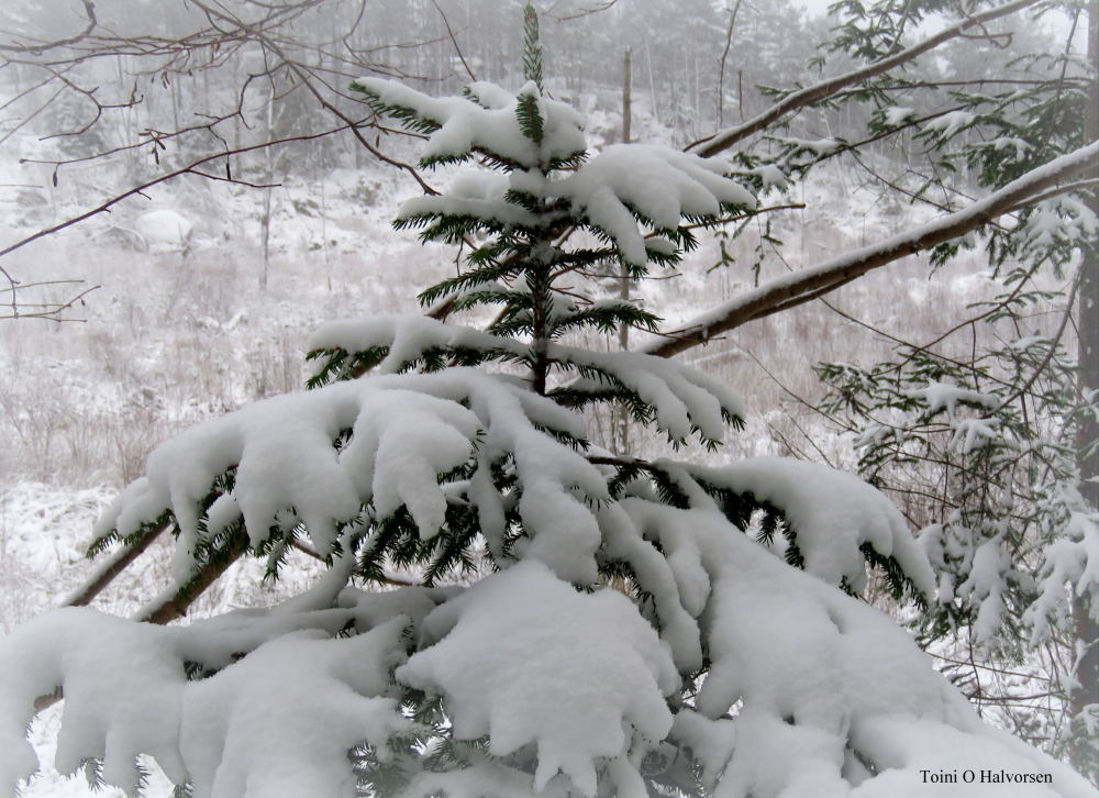 snø.jpg