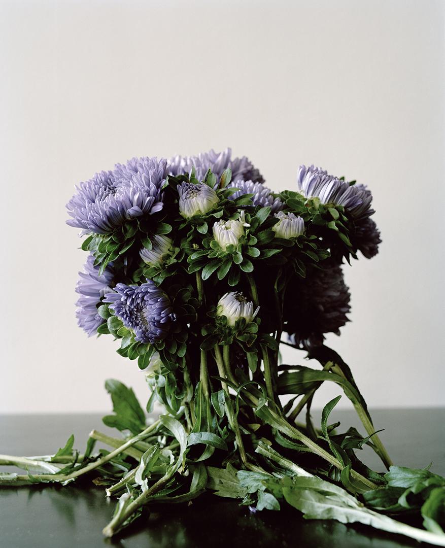 Ingrid Eggen, 'Restricted Flora nr 3', 2014