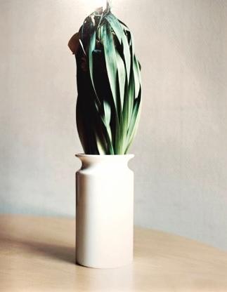 Ingrid Eggen, 'Restricted Flora nr 2', 2014