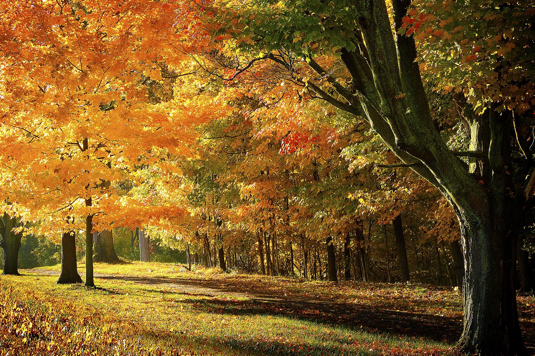 landscapes01.jpg